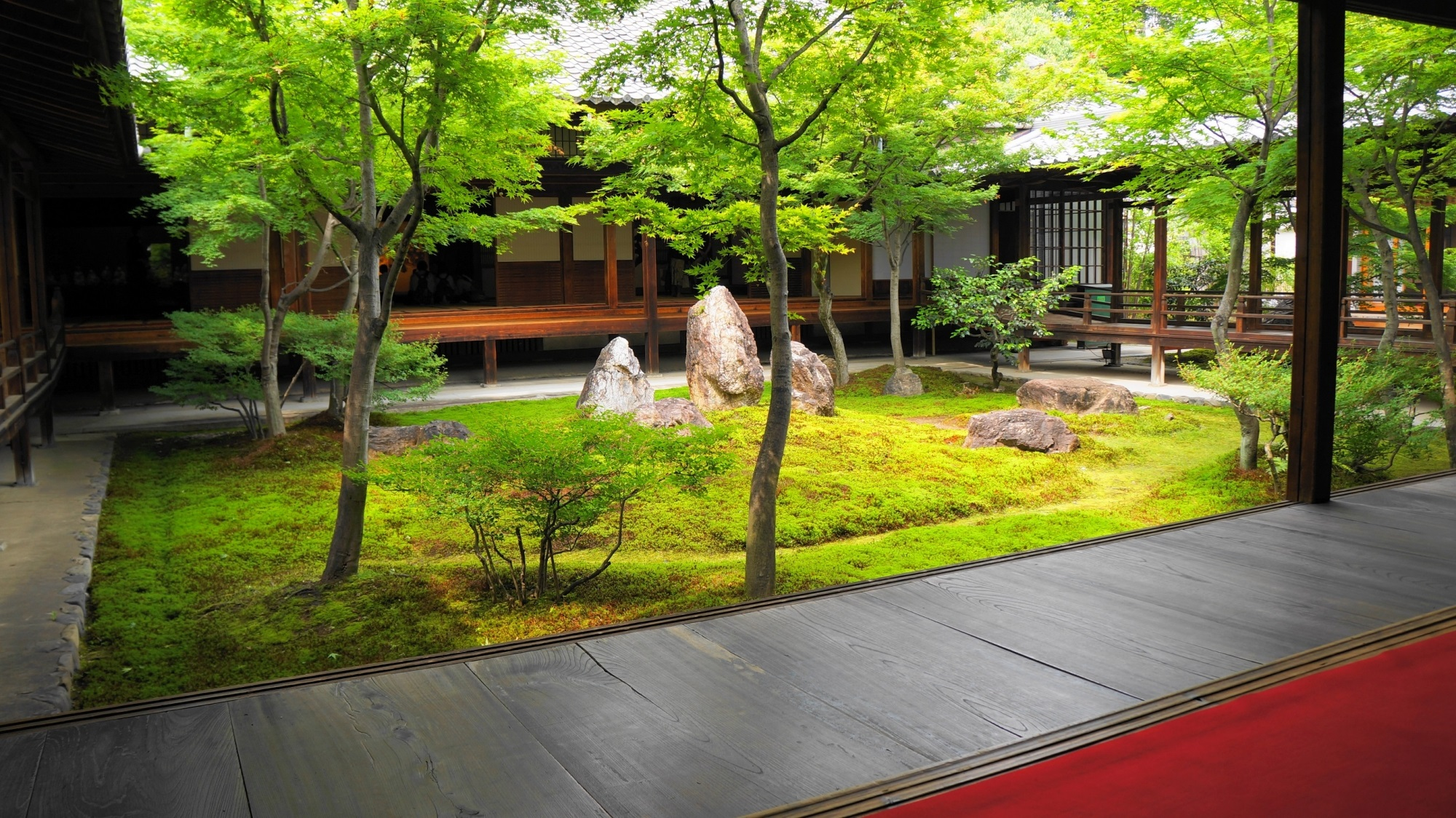 建仁寺 潮音庭 新緑と苔 絶品の中庭