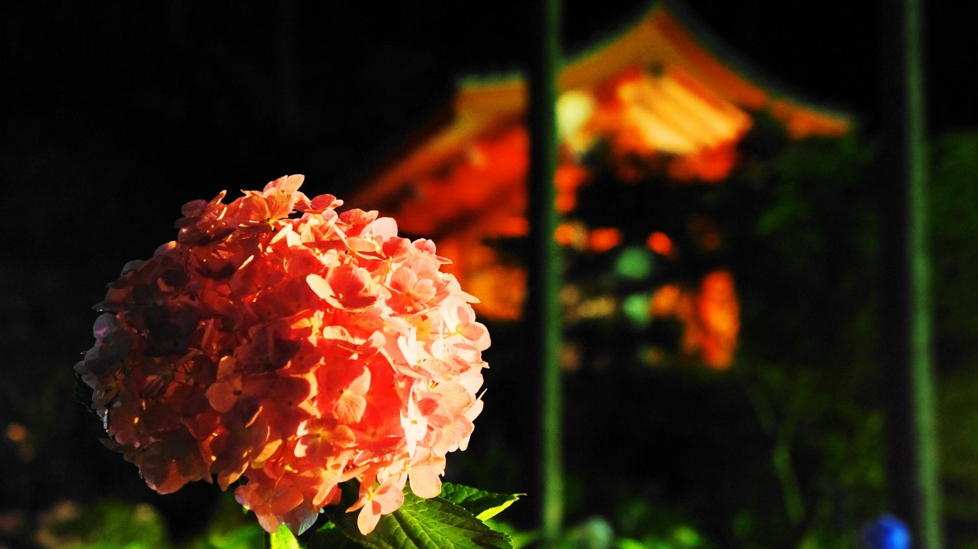 三室戸寺 紫陽花 ライトアップ 幻想的な夜のあじさい