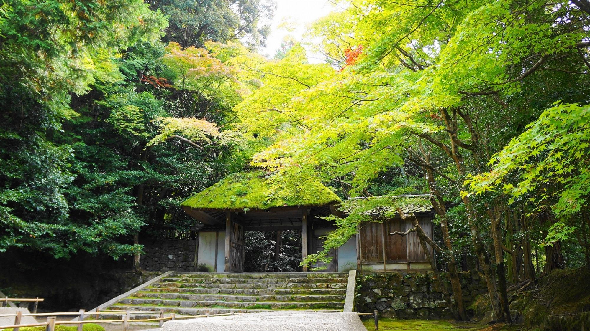 風情ある庭園とさわやかな緑