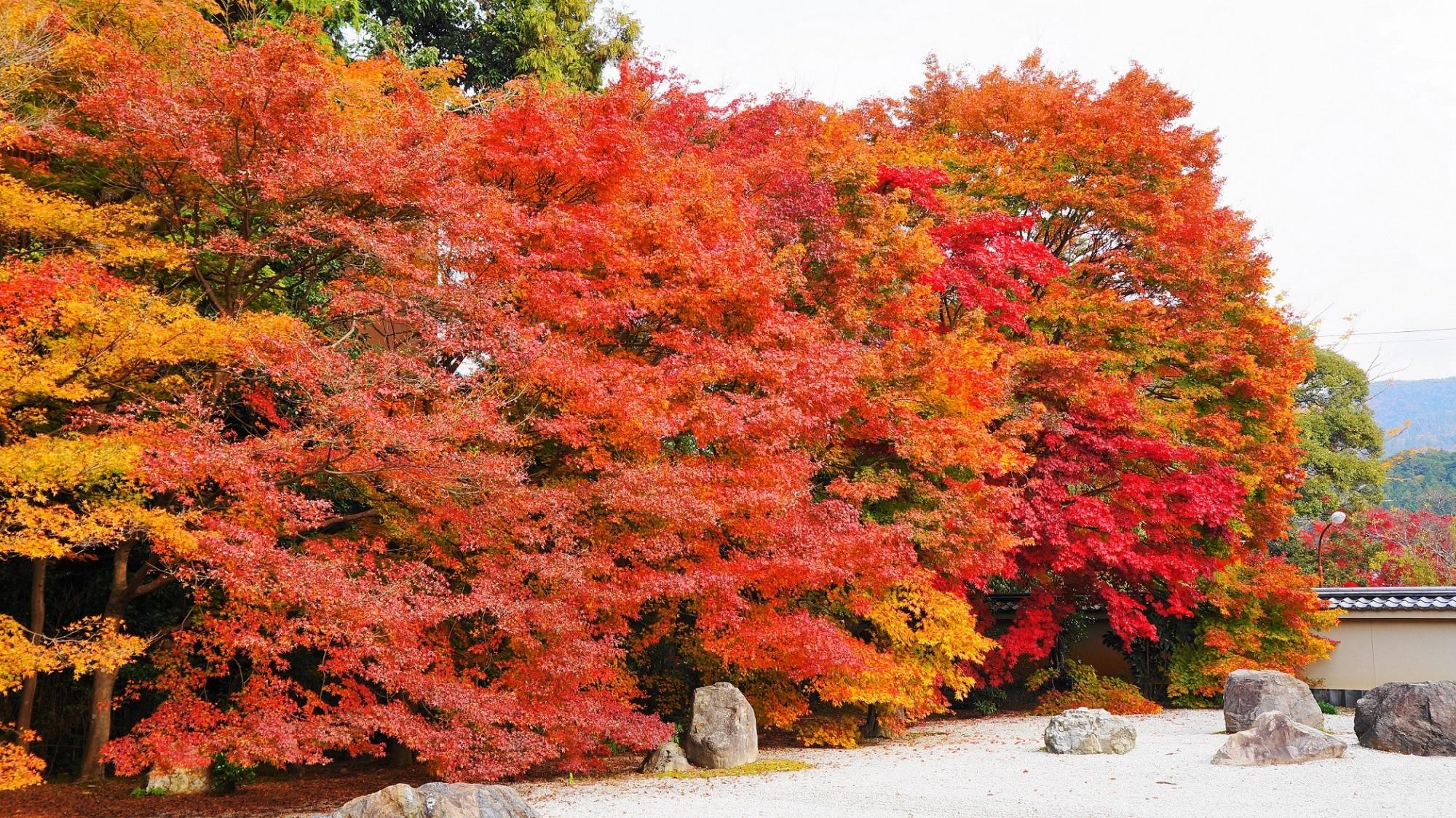 「実相院 紅葉」の画像検索結果
