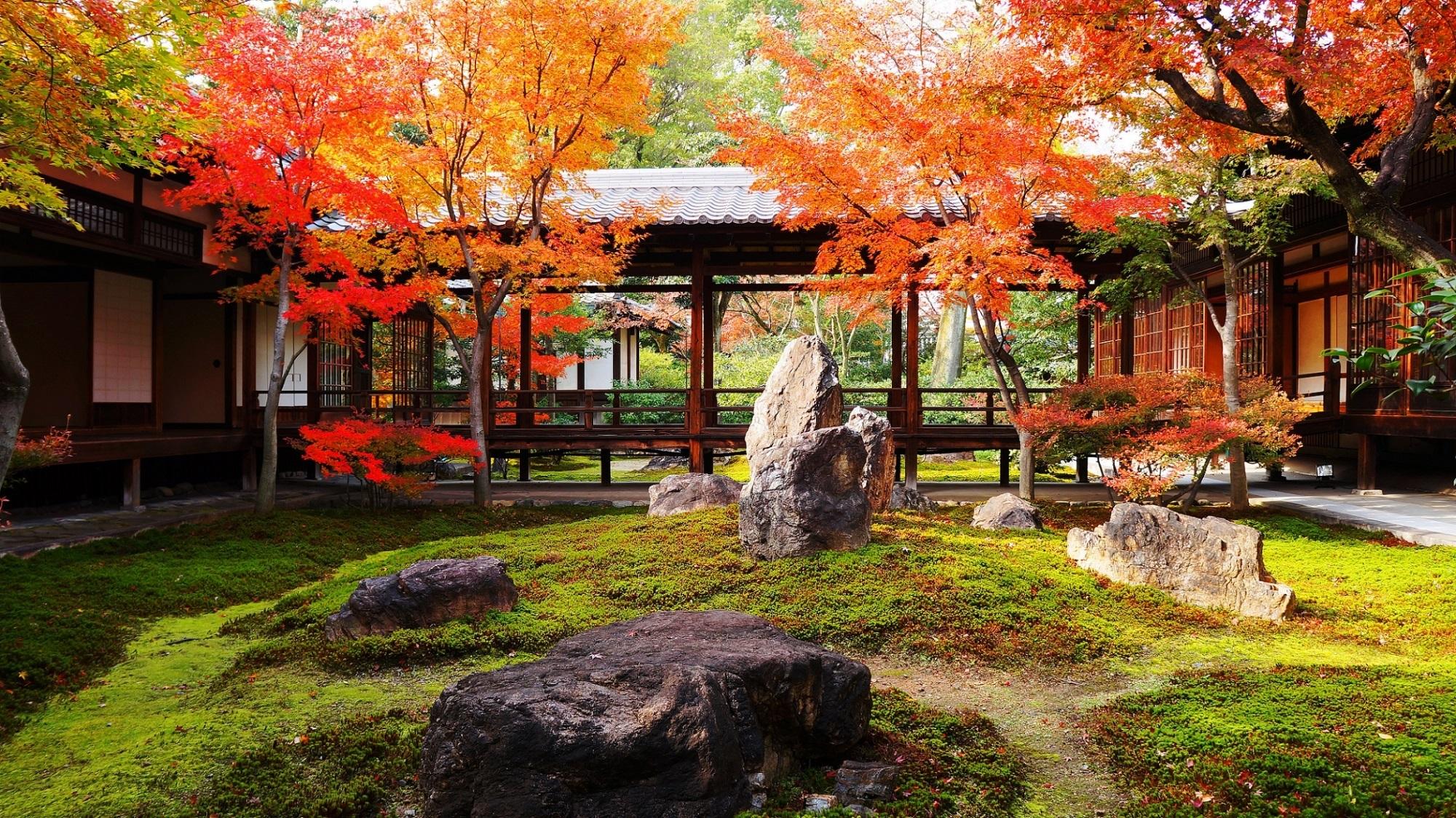 潮音庭 紅葉 建仁寺の美しすぎる紅葉と苔