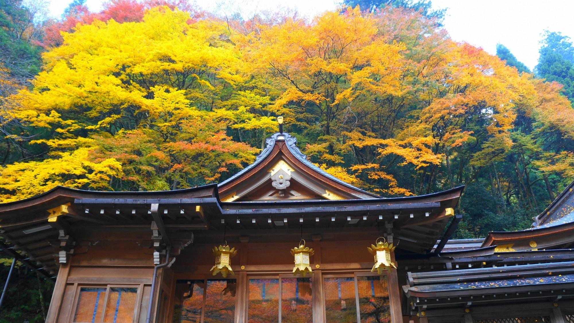 貴船神社 紅葉 鮮やかな秋の彩りと貴船川のもみじ