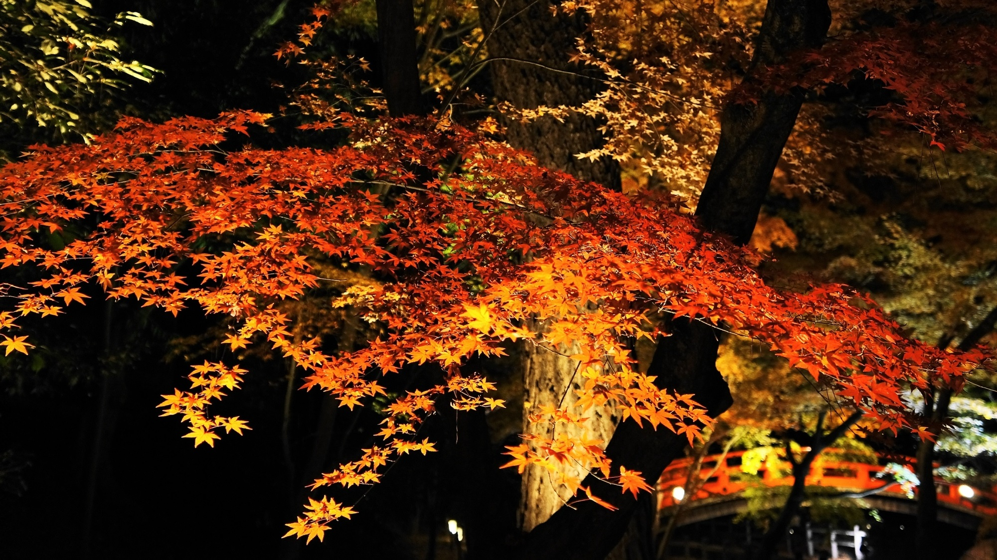 北野天満宮 紅葉 ライトアップ 京都の優美な秋の夜