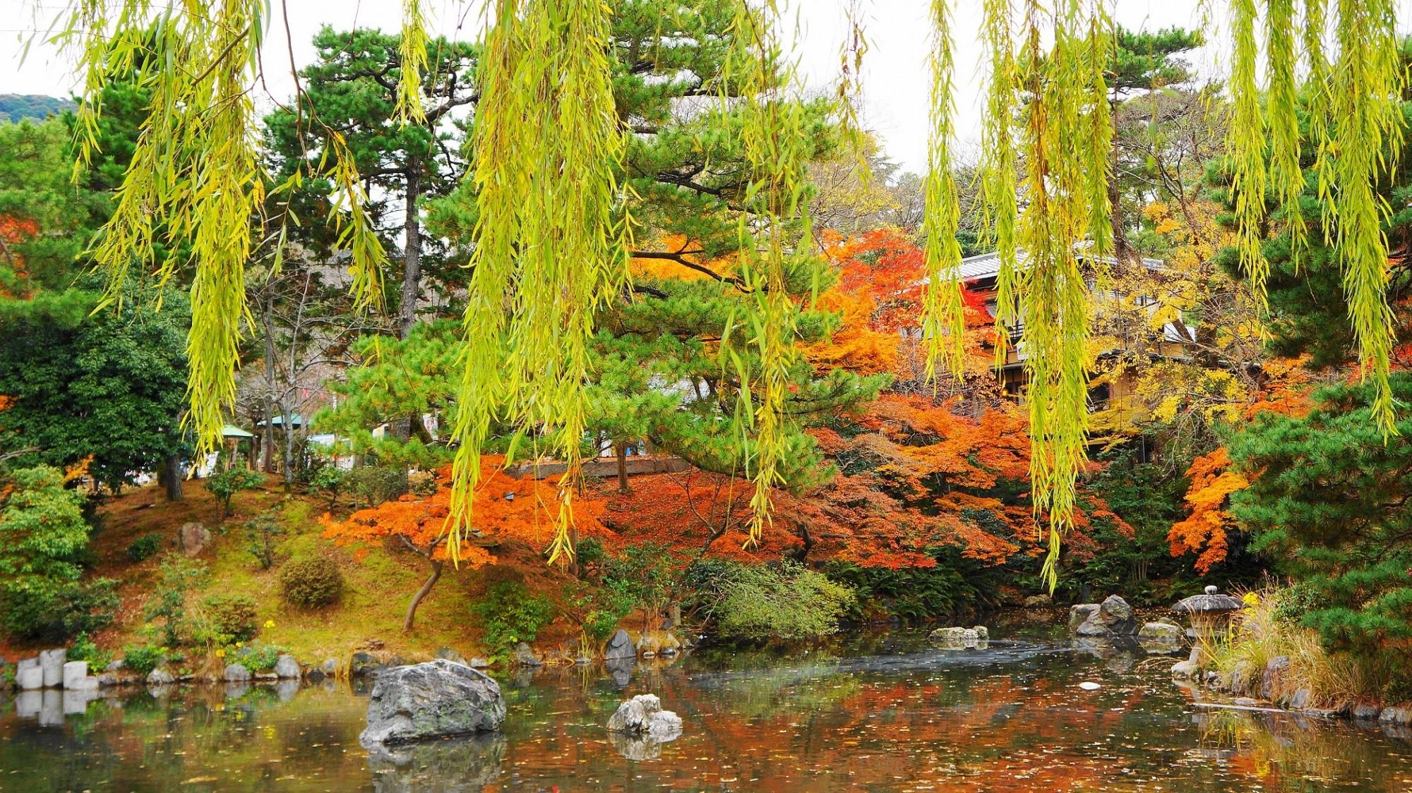 京都 円山公園 紅葉 名勝公園の秋の彩り