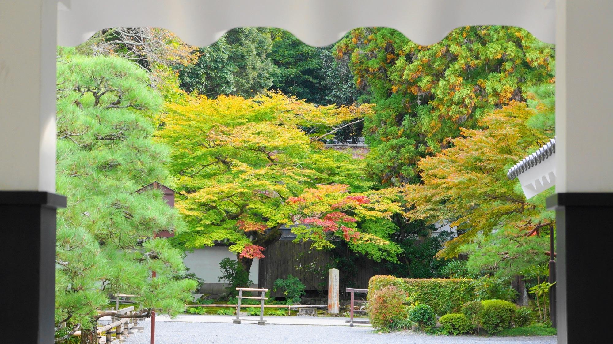 南禅寺 水路閣と青もみじ 秋色に色づき始め