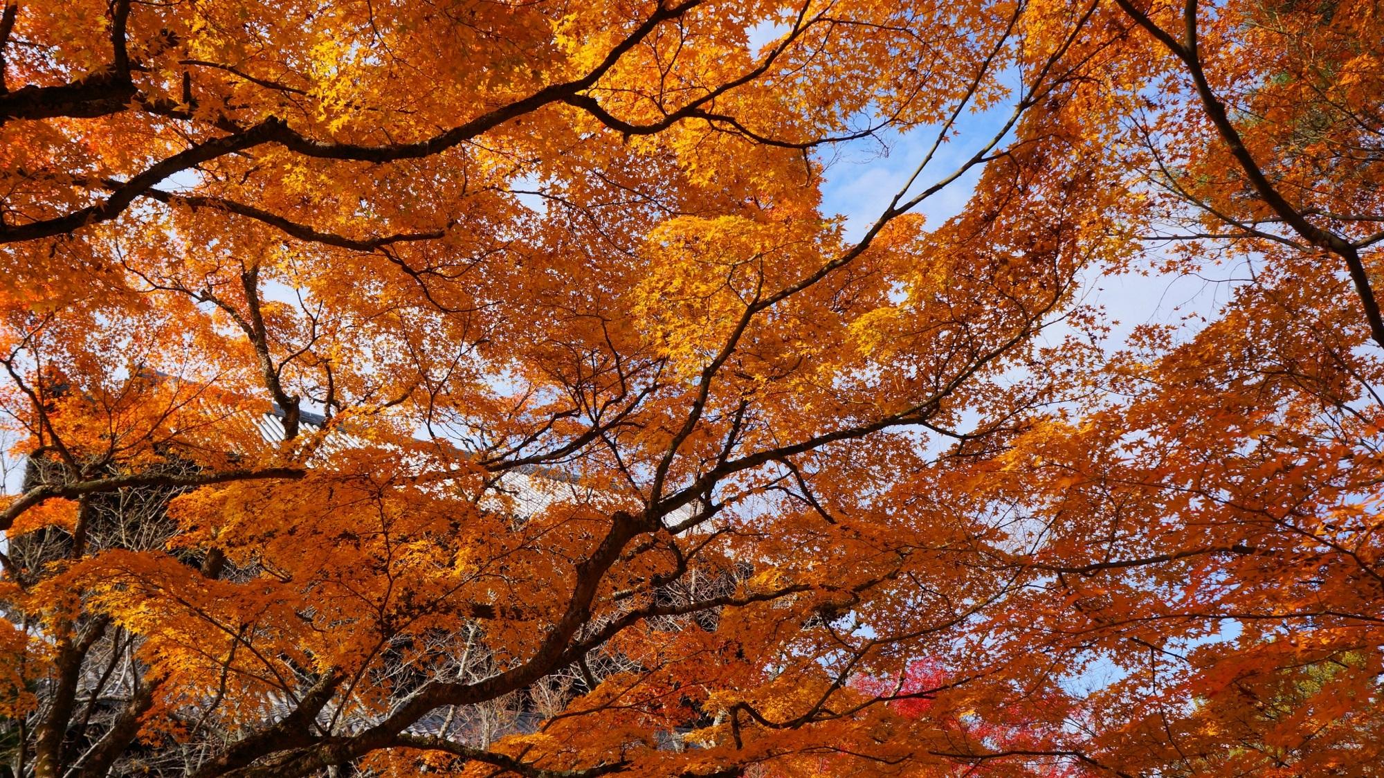 空を染める紅葉と優雅な彩り