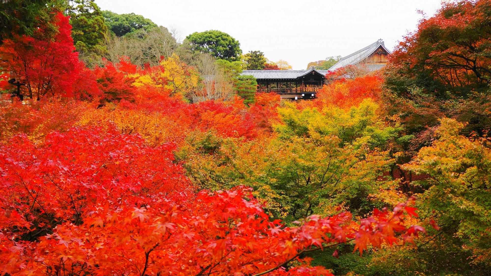 東福寺 紅葉 通天台から眺めた紅葉名所