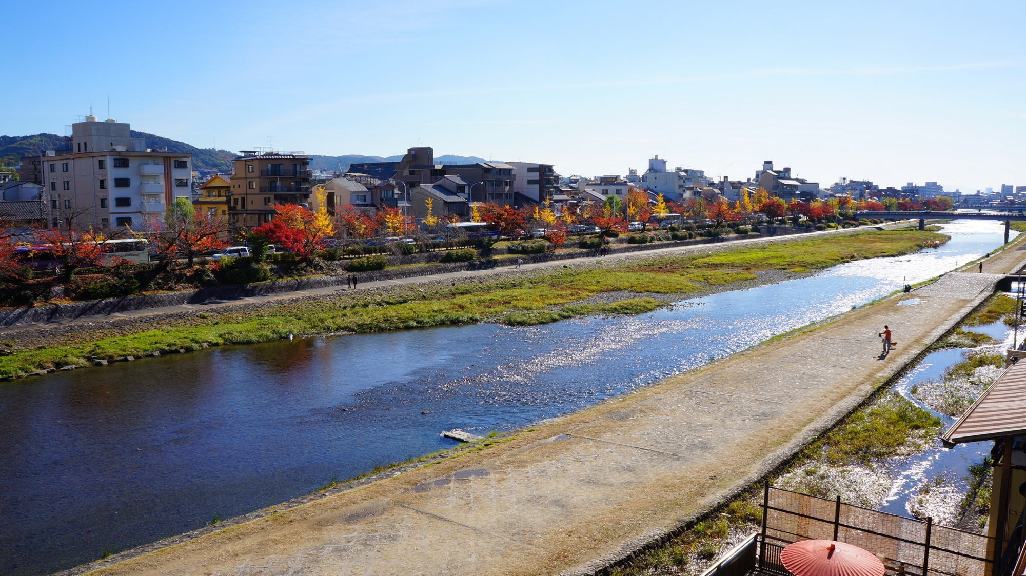 京都鴨川の見ごろの紅葉(四条から五条)