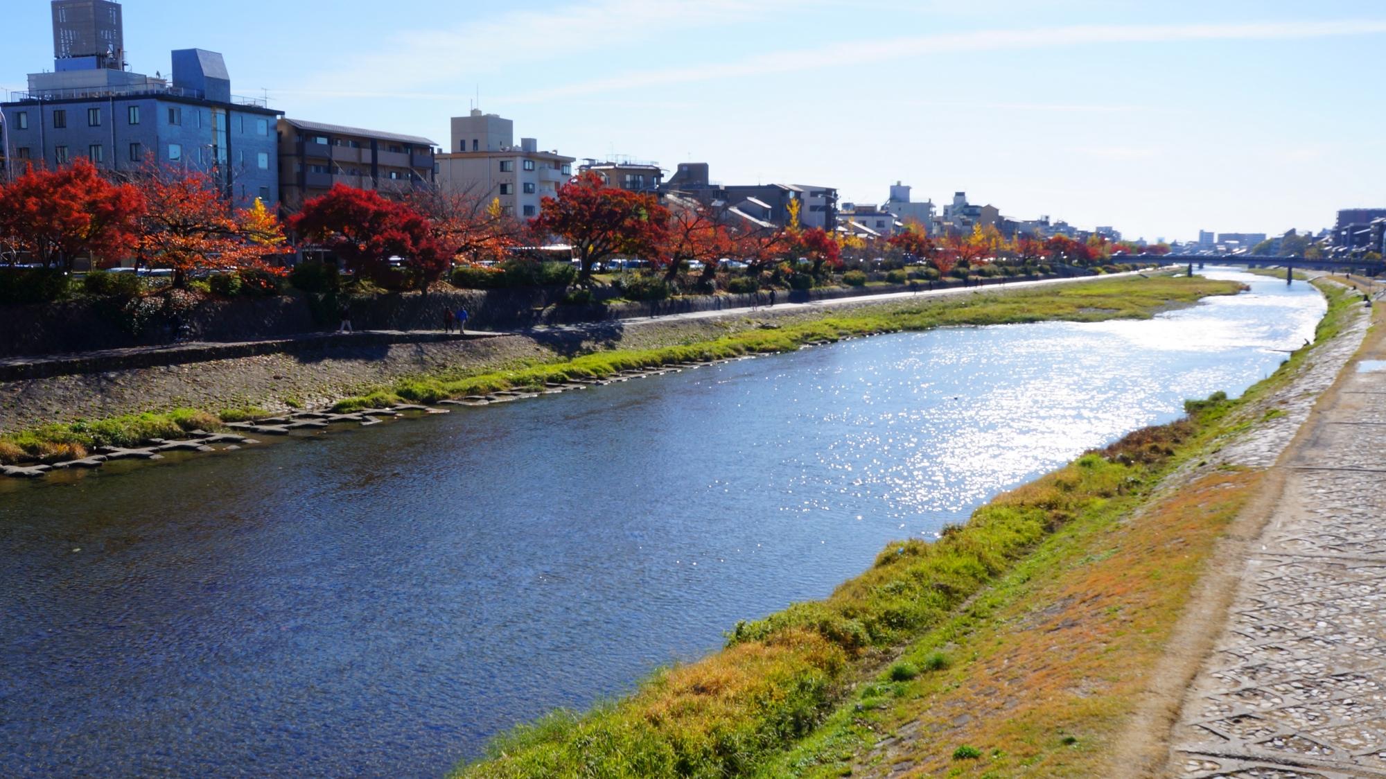 鴨川の長閑な綺麗な見ごろの紅葉