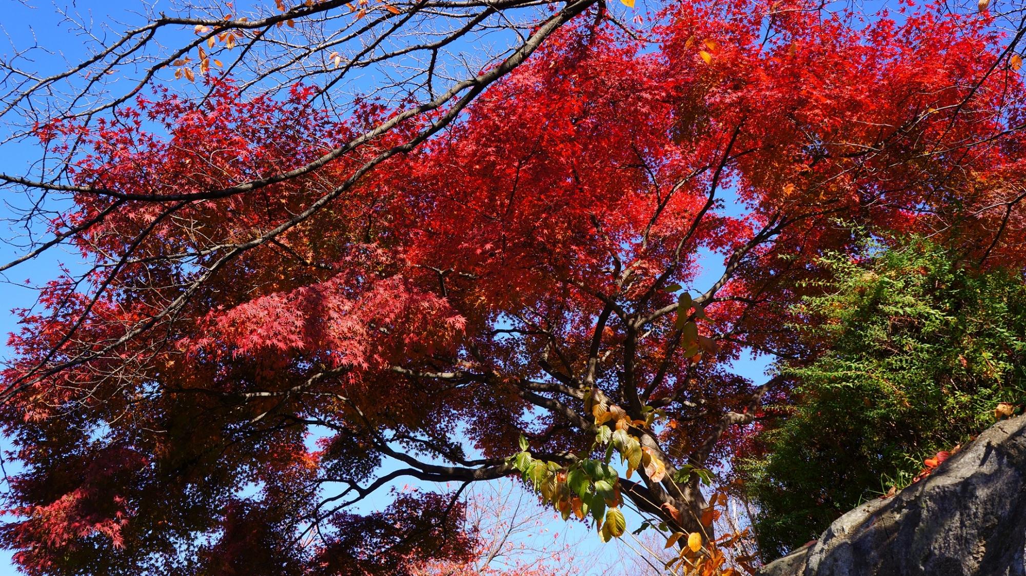 Autumn leaves Kamo-Gawa River Kyoto