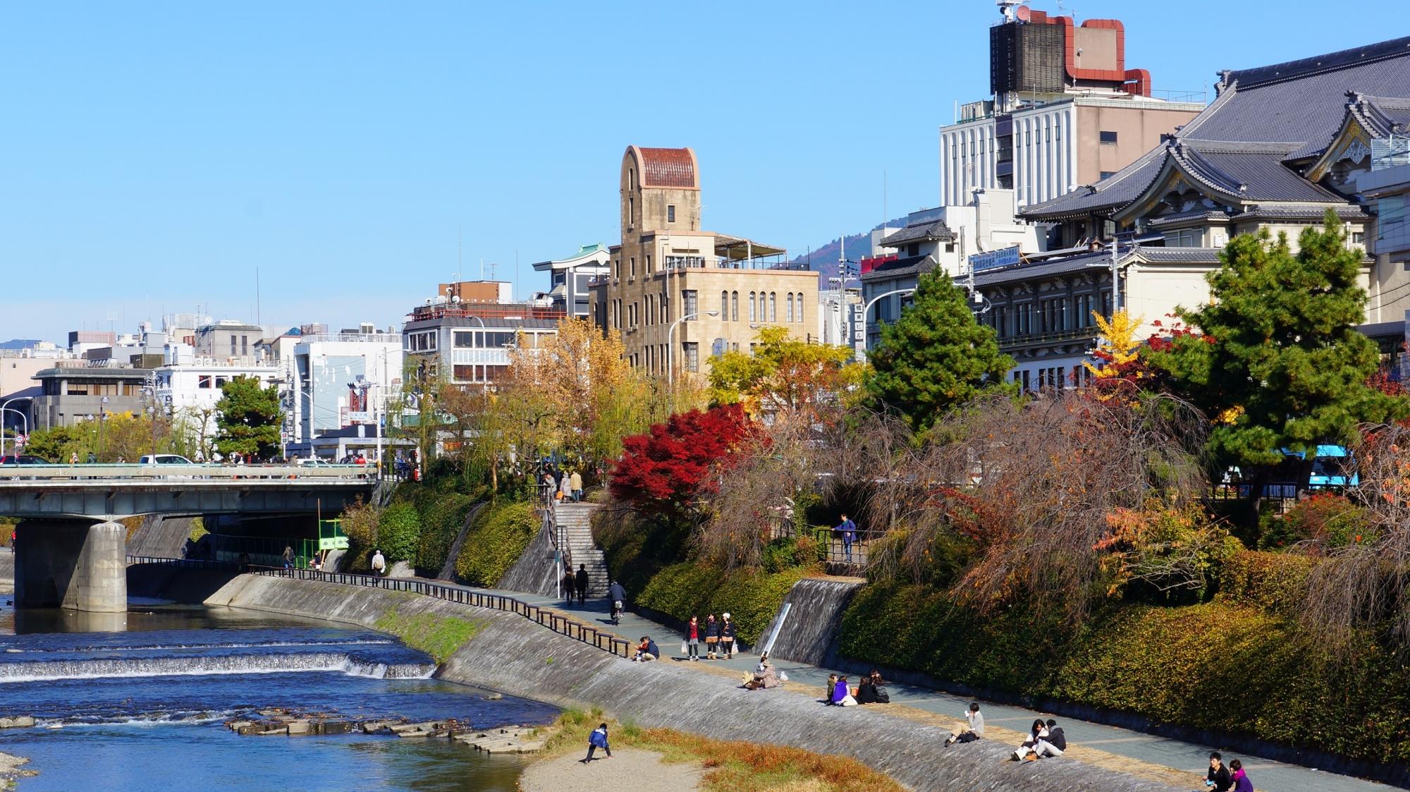 京都鴨川の見ごろの鮮やかな紅葉と四条大橋と南座