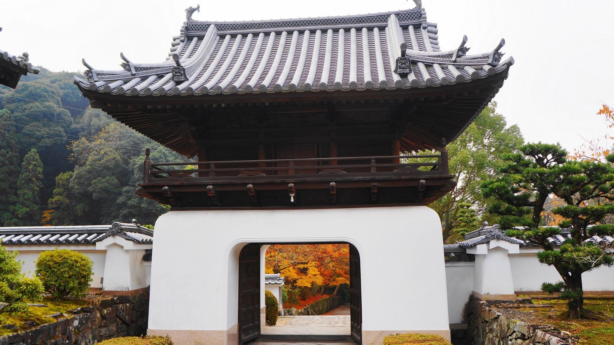 興聖寺と琴坂の素晴らしい紅葉と華やかな秋色