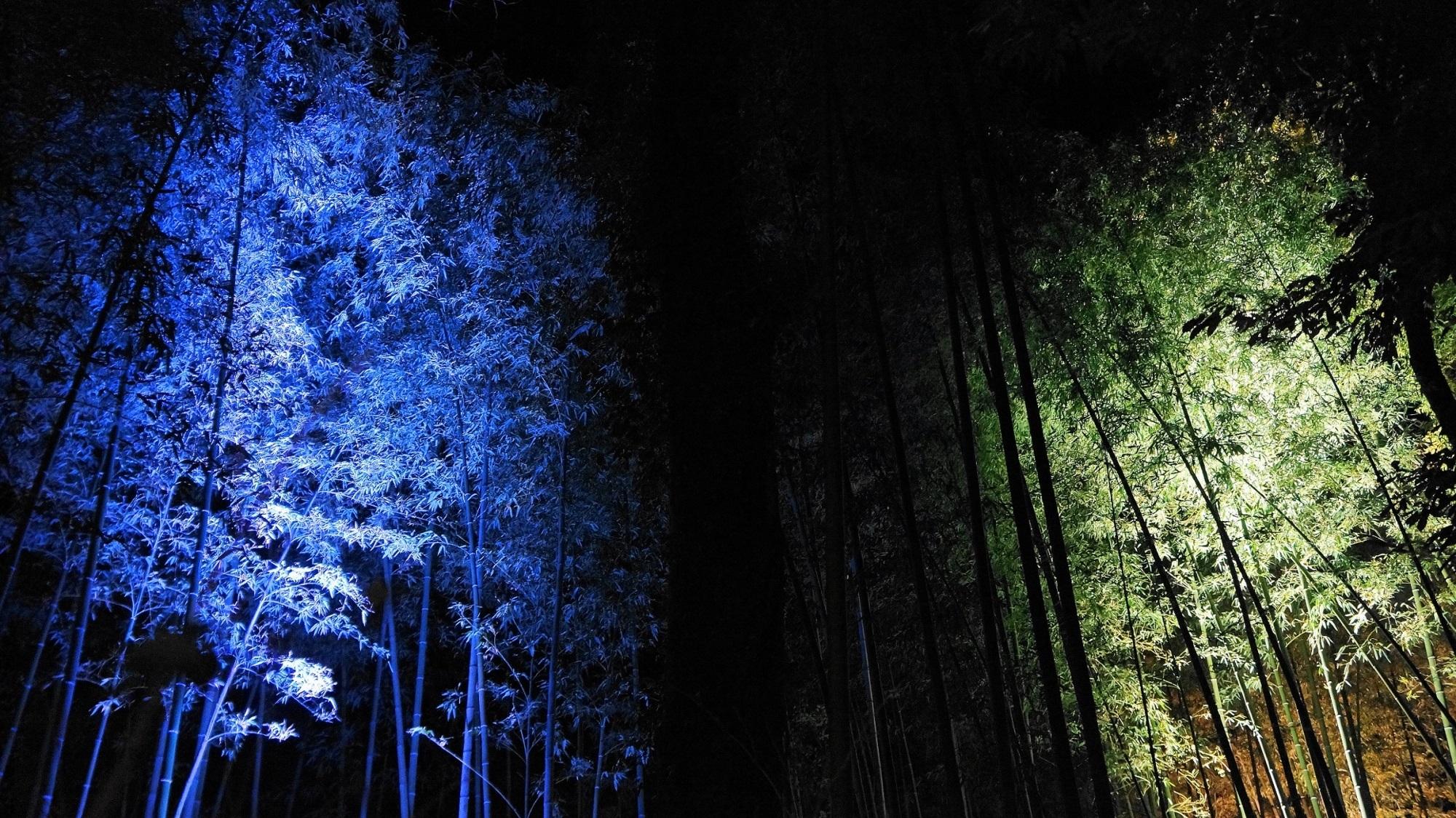 嵐山・渡月橋・竹林ライトアップ