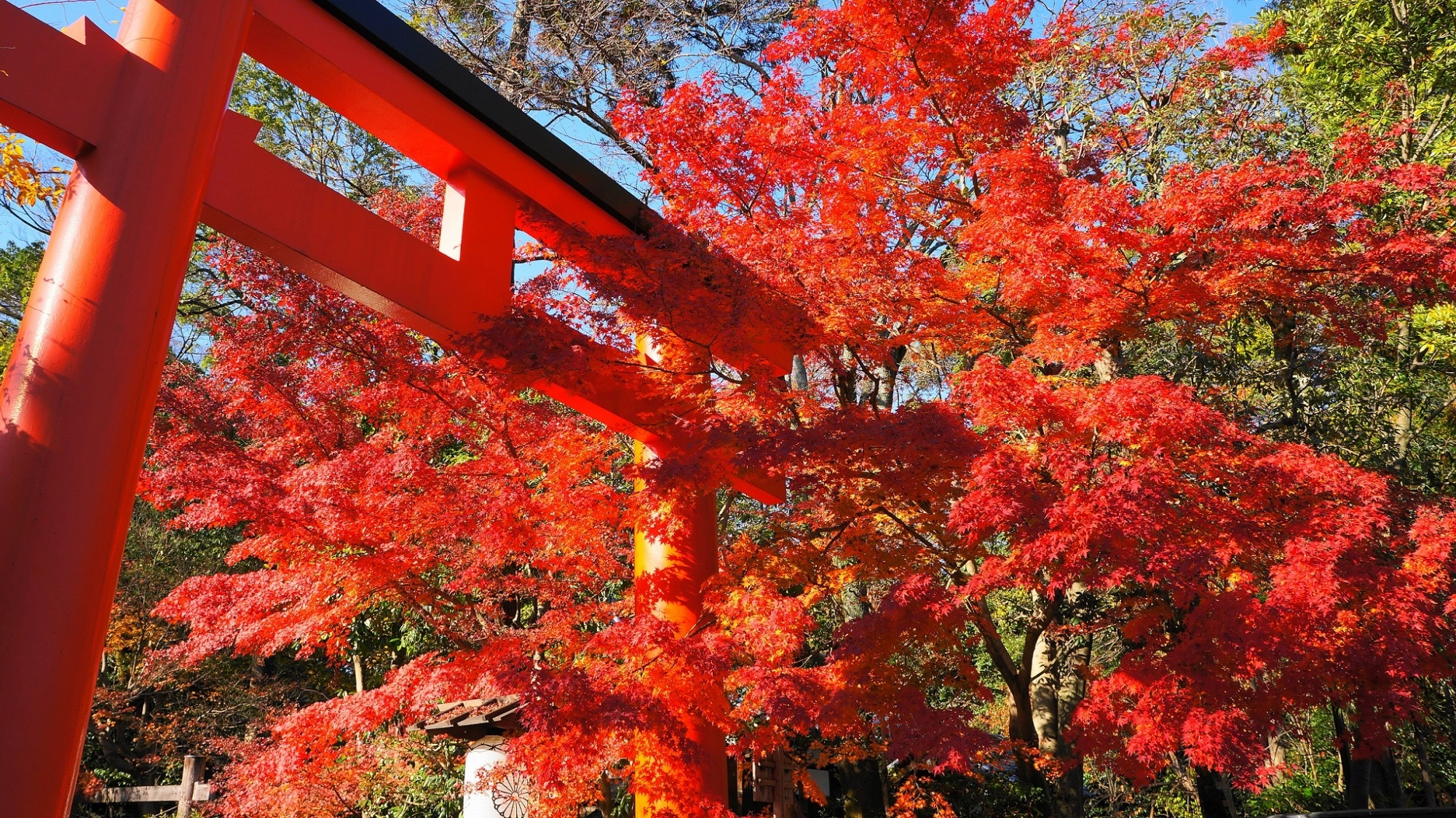 下鴨神社 紅葉 京都で一番遅い紅葉