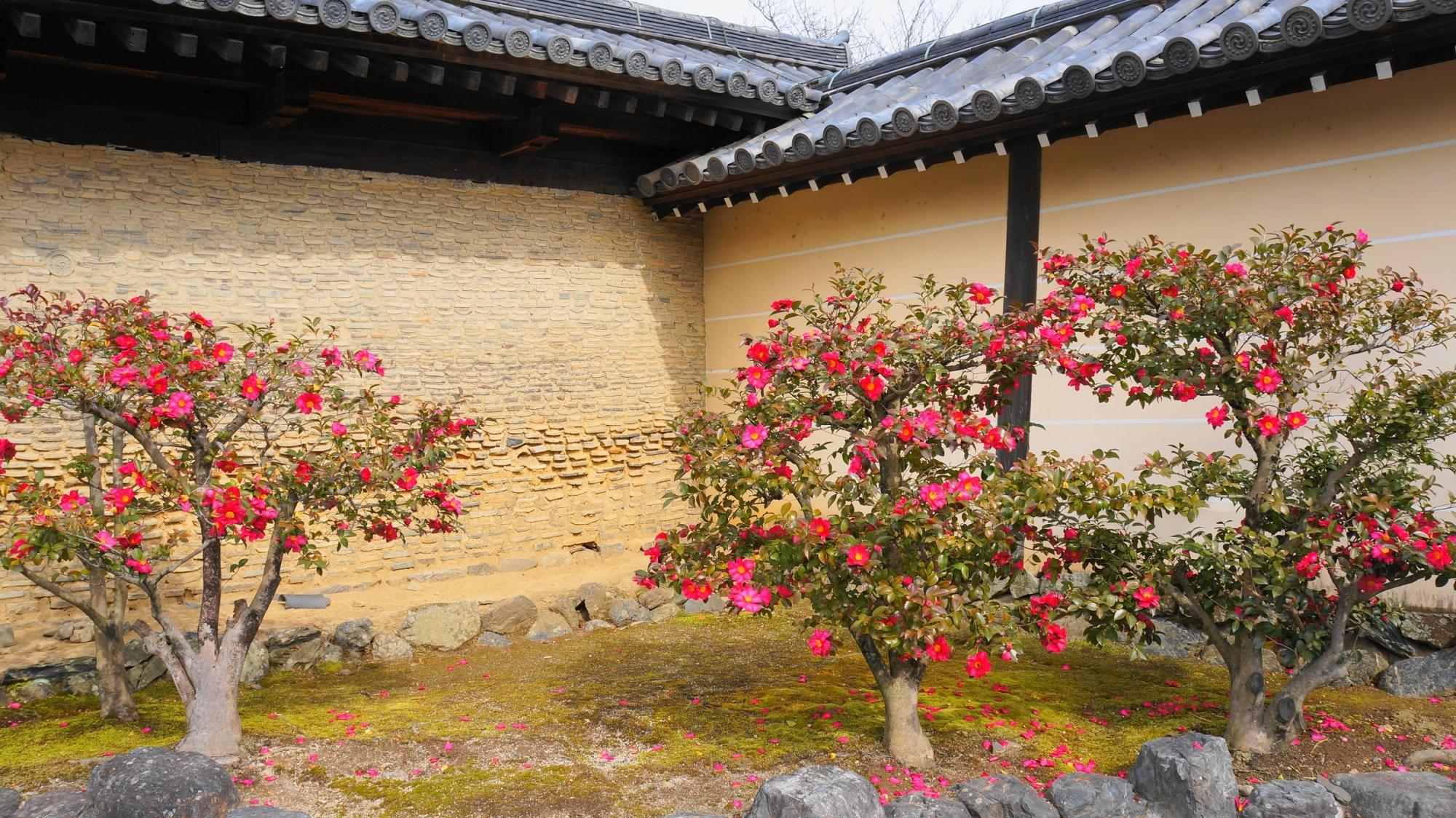 高画質 写真 サザンカ 天龍寺