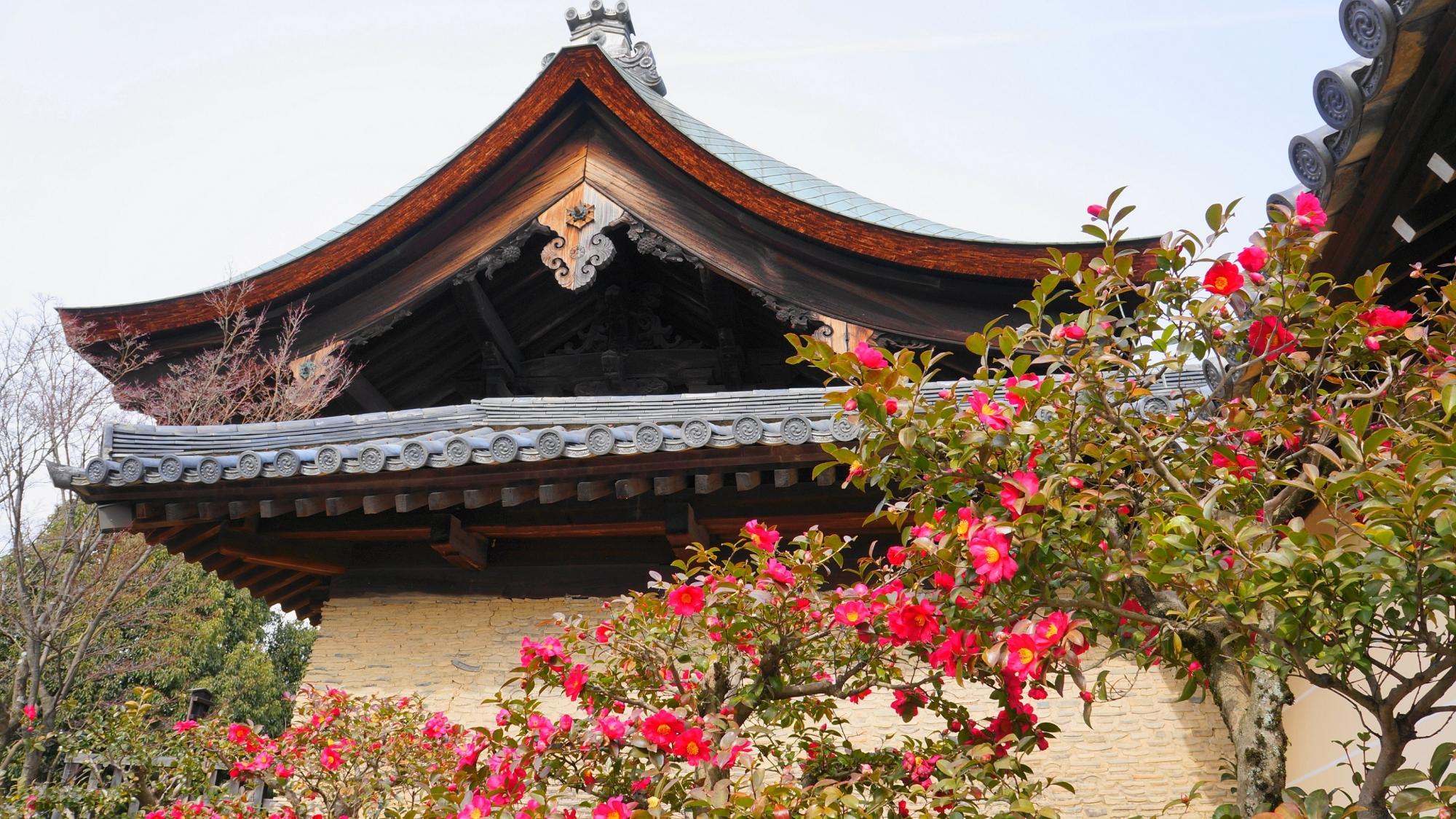 華やかさの中にも風情が感じられる冬の天龍寺のサザンカ