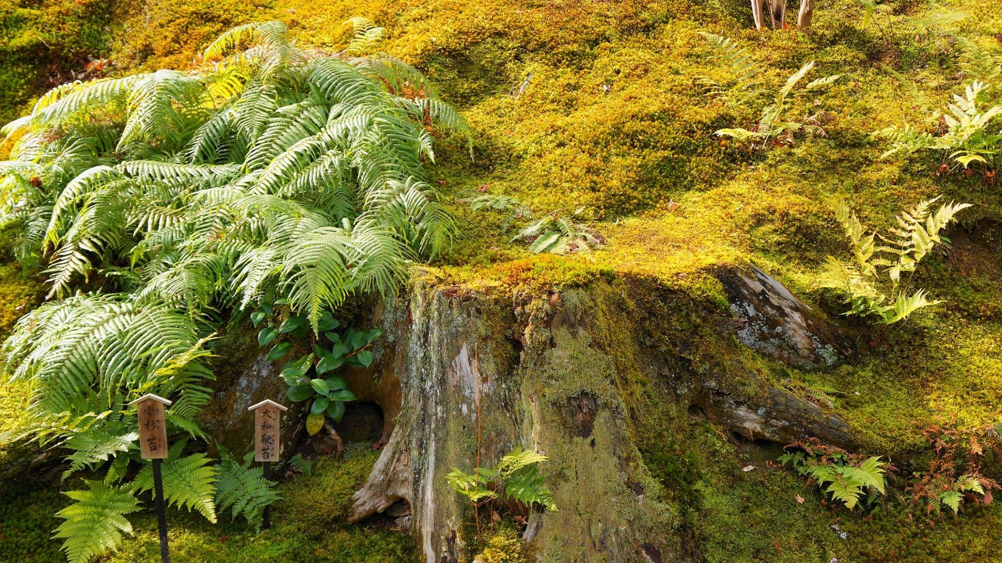 苔に彩りをそえるシダなどの他の植物