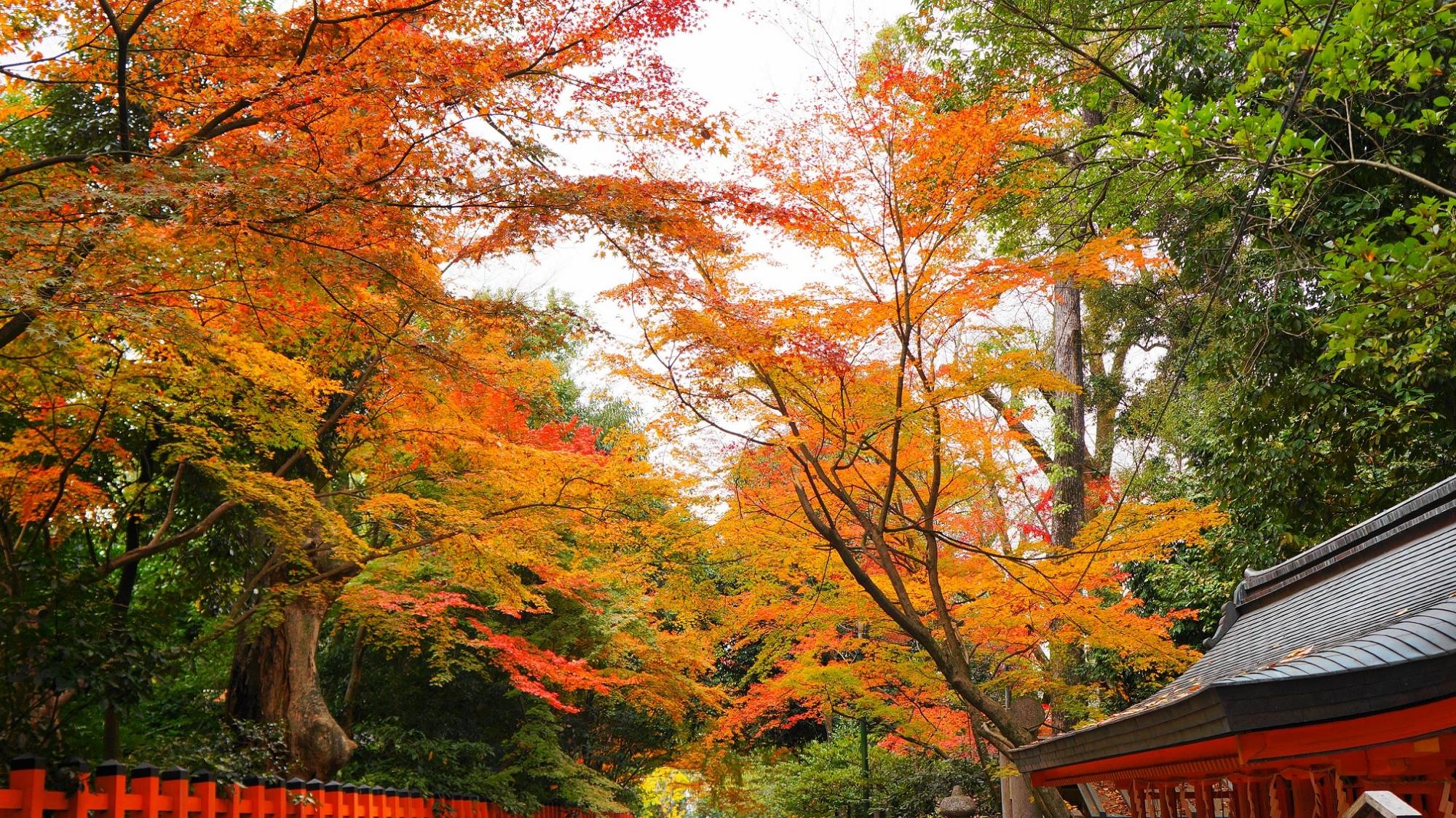Yasaka-jinja Shrine Kyoto autumn leaves 見ごろ 日吉社 八坂神社