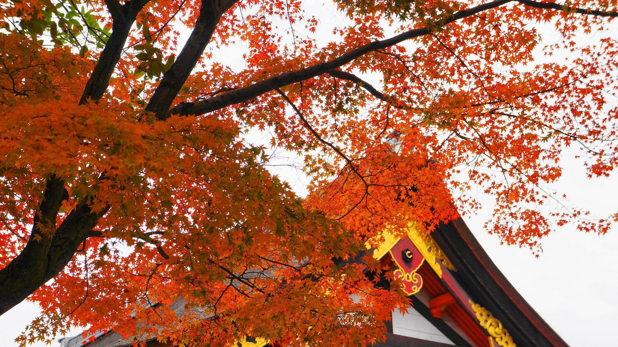 八坂神社 本殿 紅葉 11月