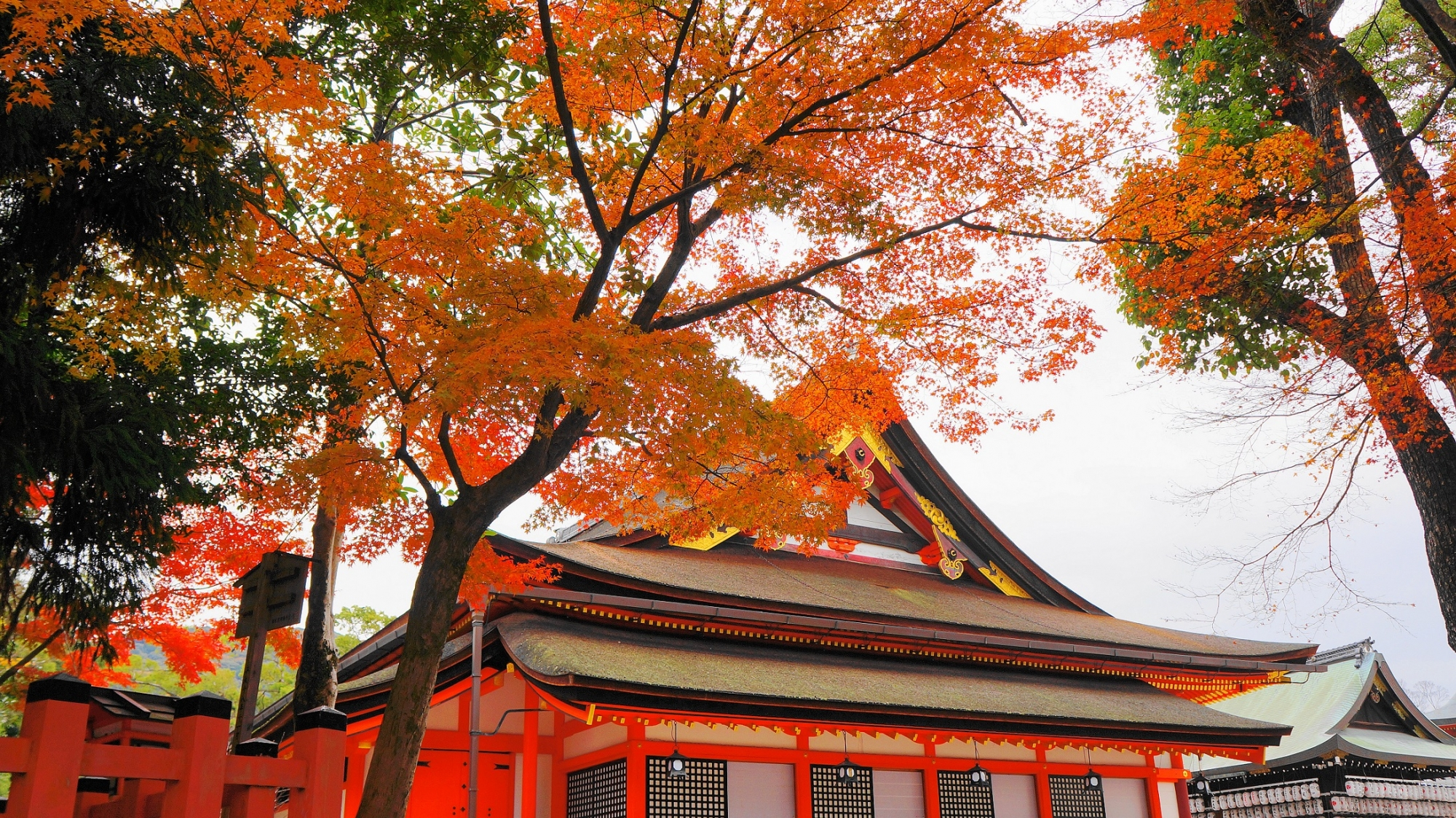 八坂神社 本殿 紅葉