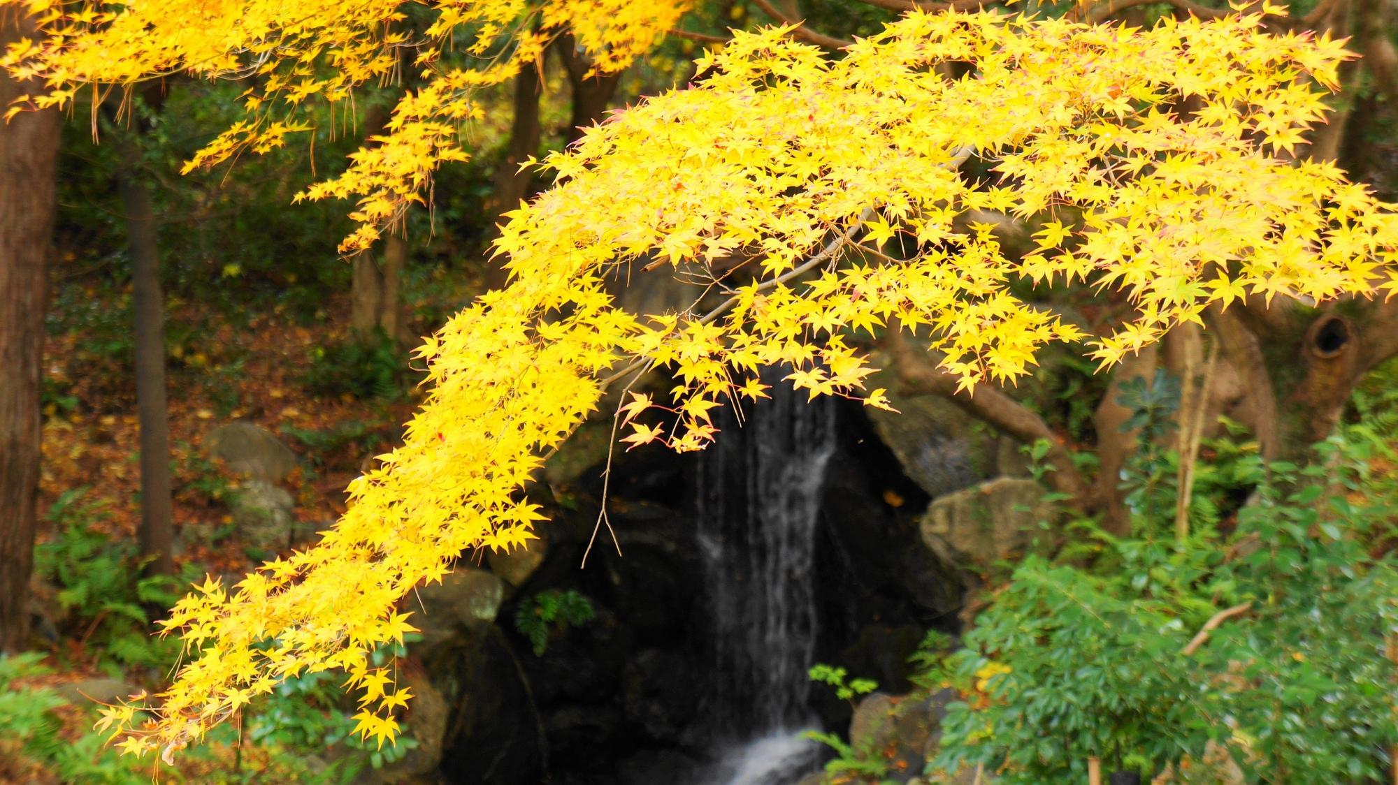 円山公園の見ごろの紅葉
