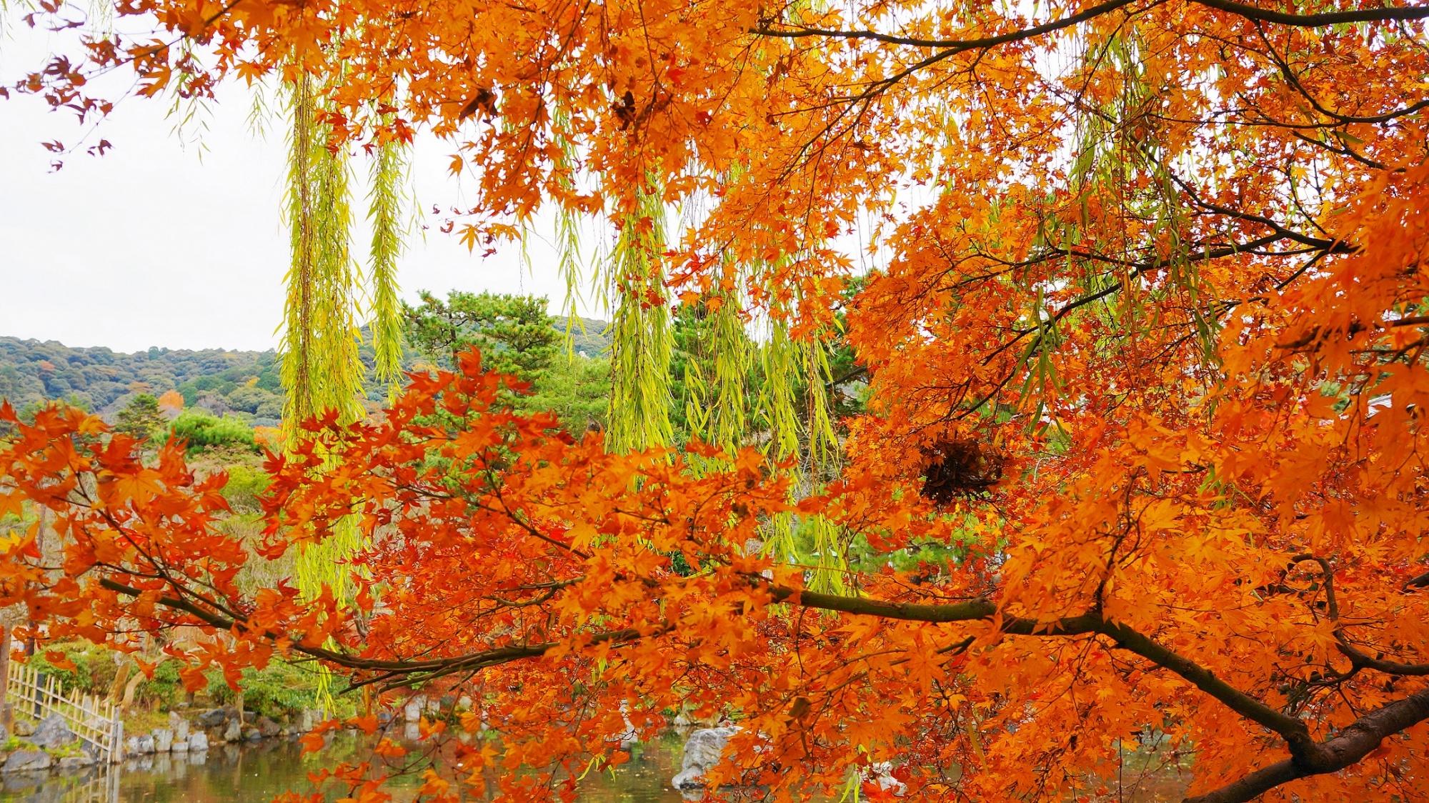 円山公園 紅葉と柳