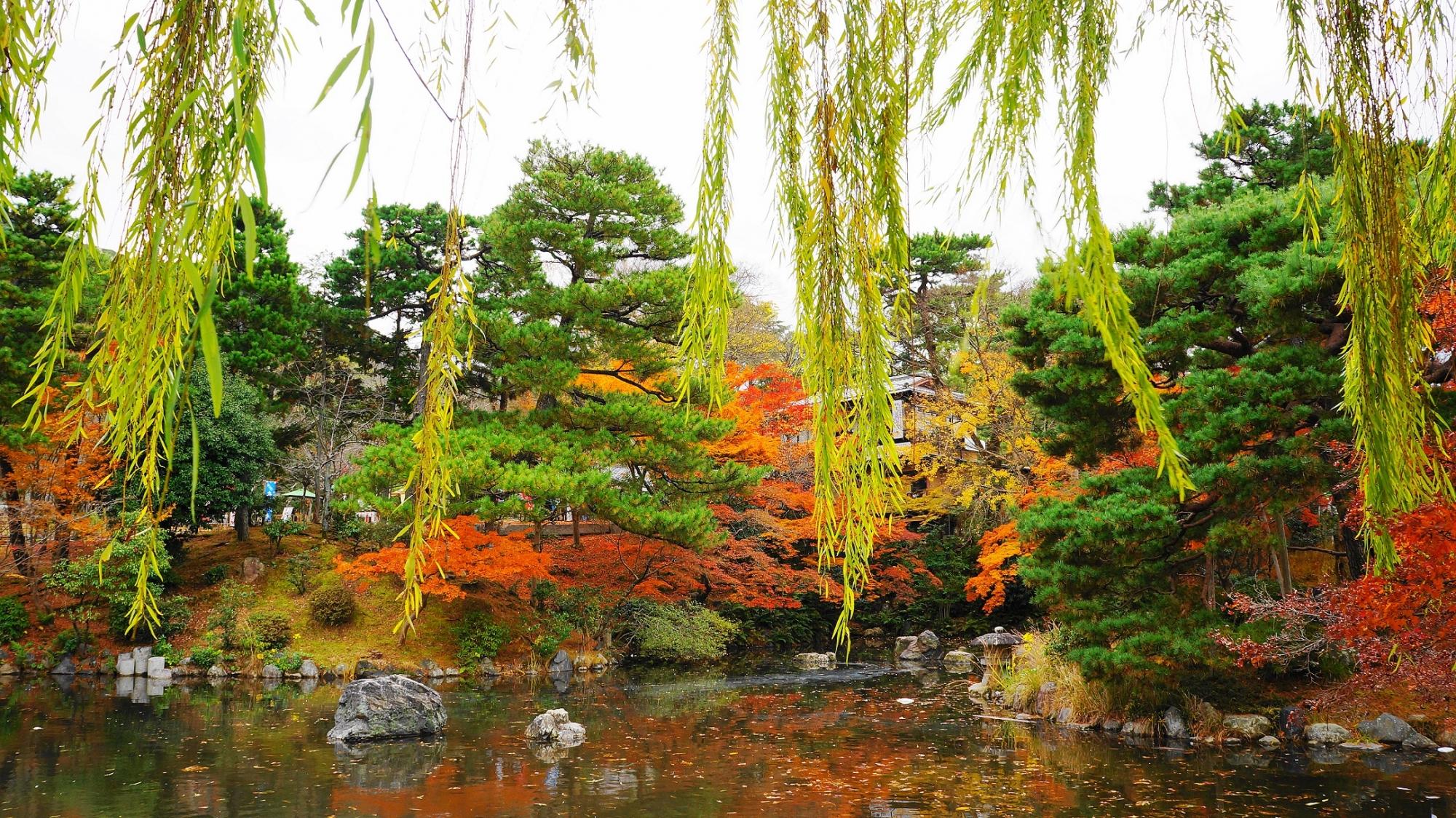 円山公園 紅葉 見ごろ 柳