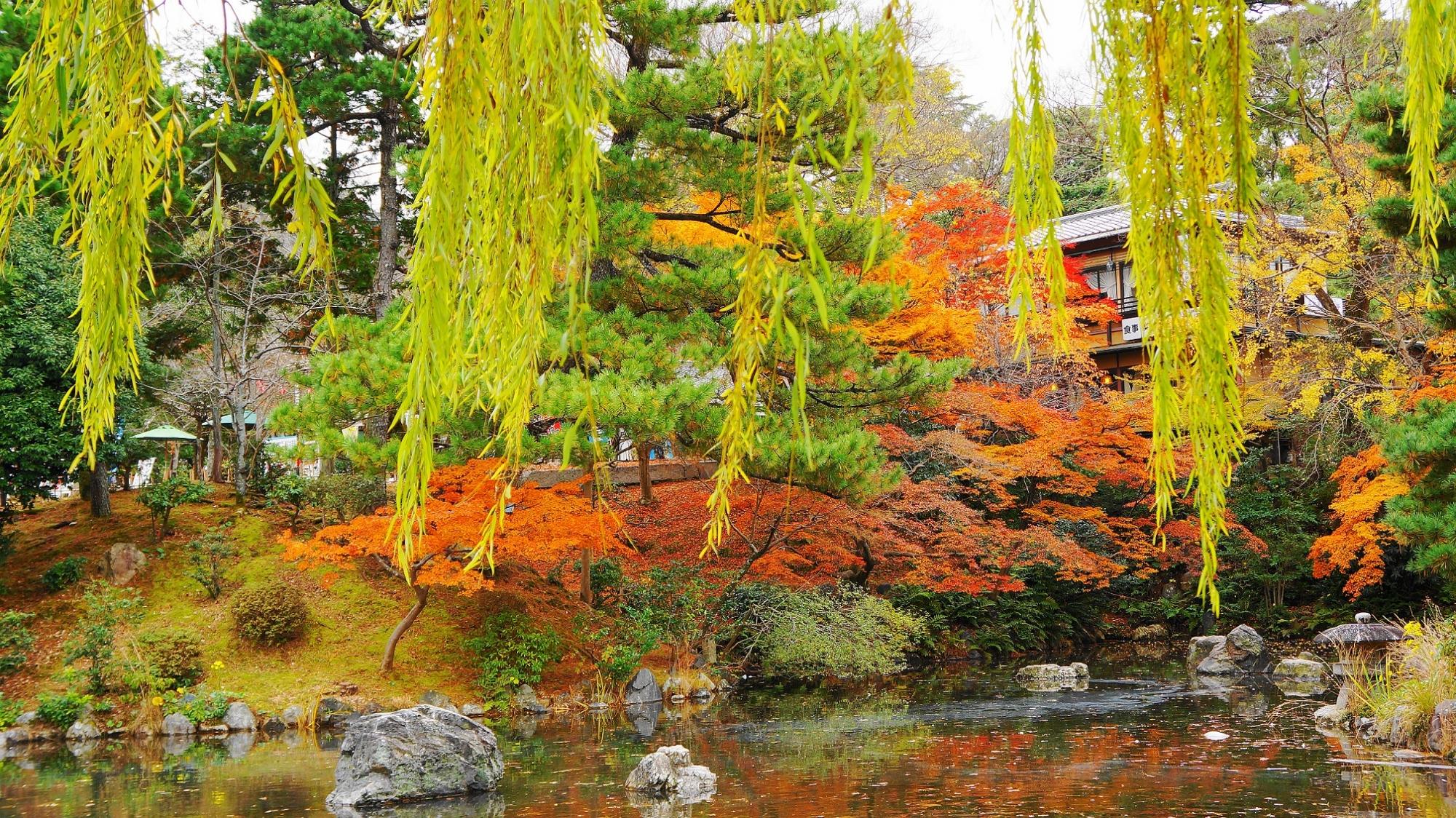 円山公園 紅葉 柳 見ごろ