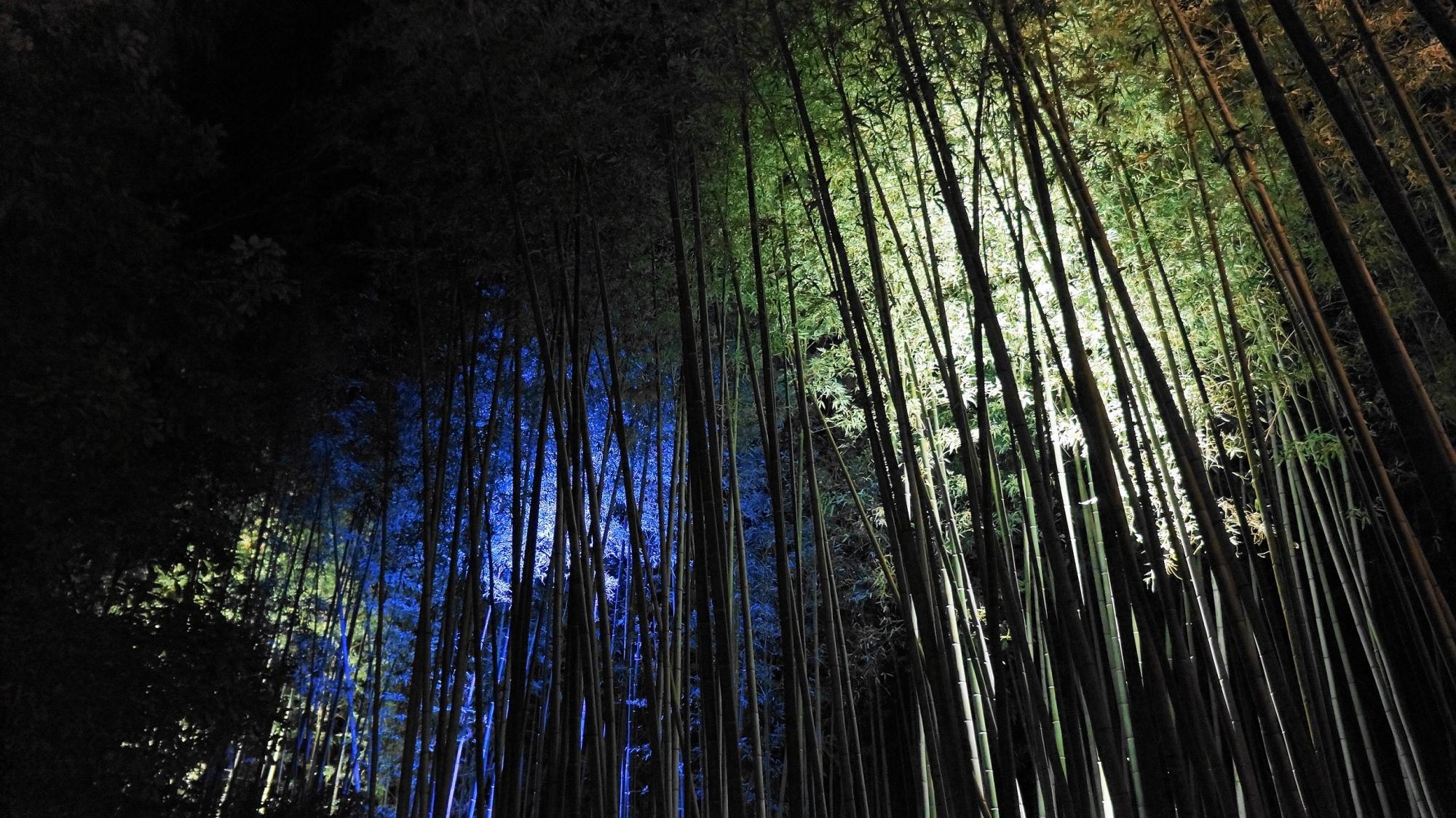 嵐山花灯路の青色のライトアップ