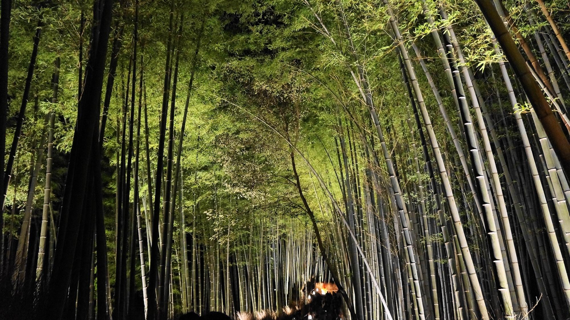 嵐山花灯路の神秘的な竹林ライトアップ