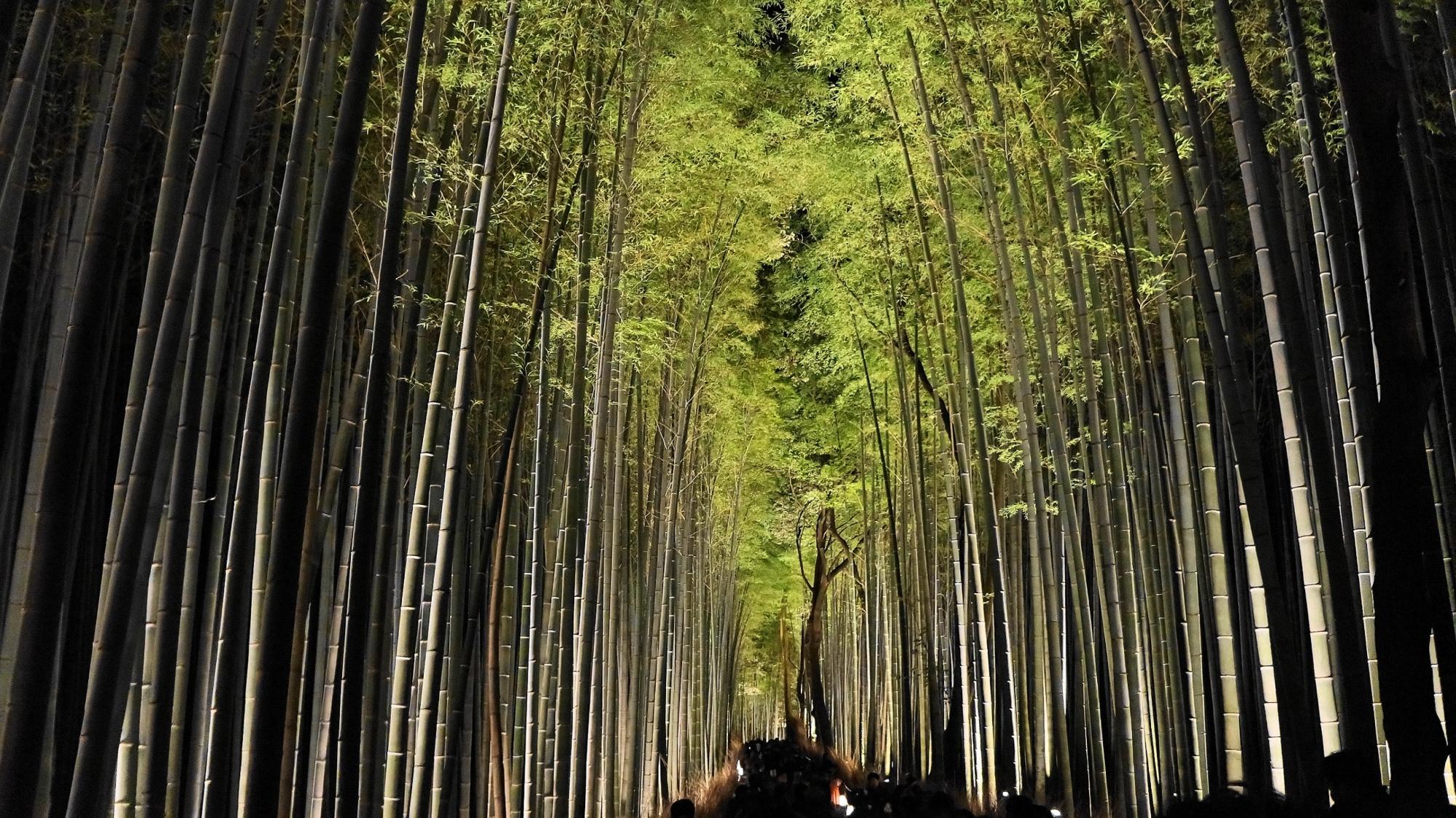 嵐山花灯路の竹林ライトアップ