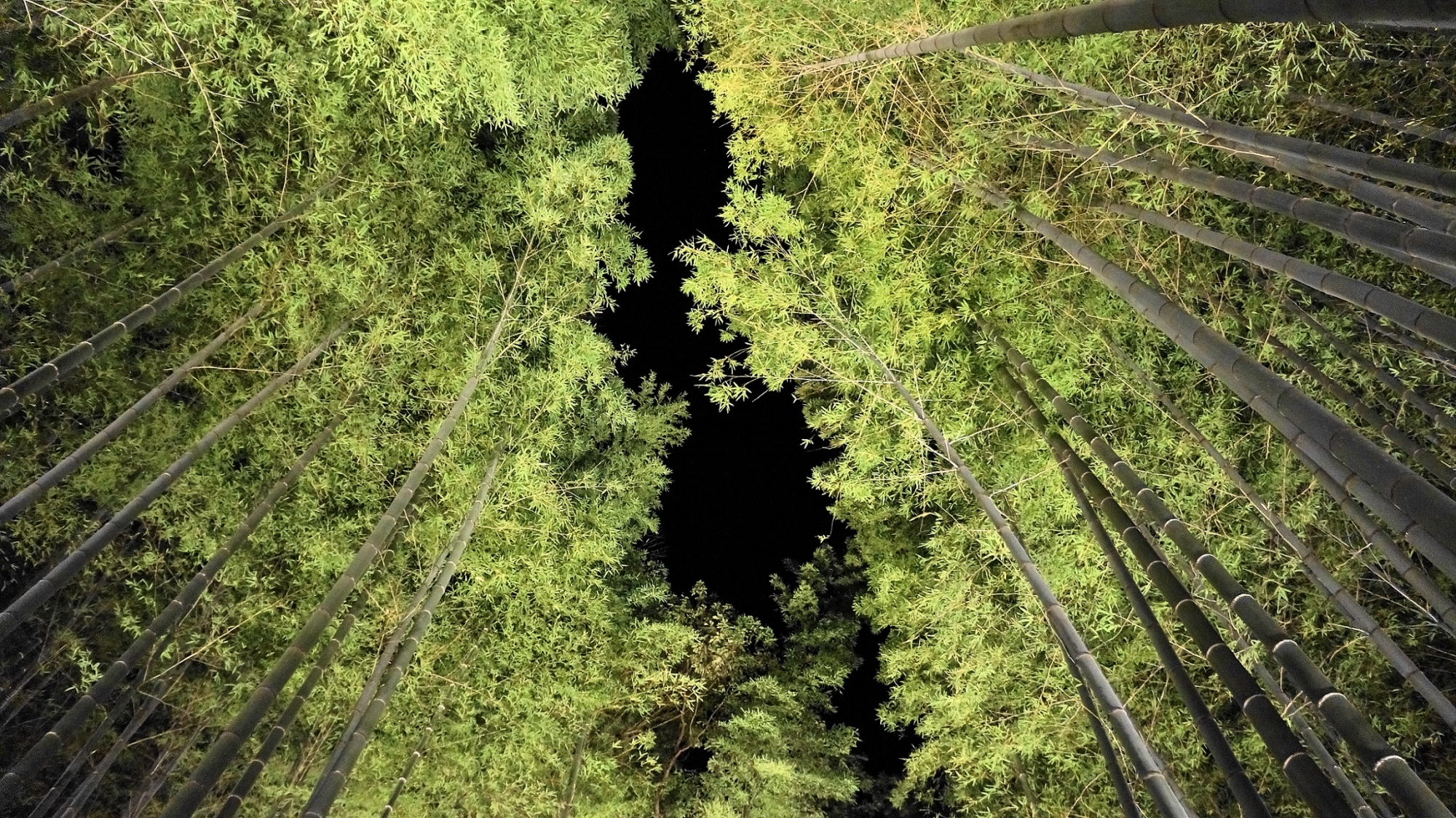 嵐山花灯路の竹林