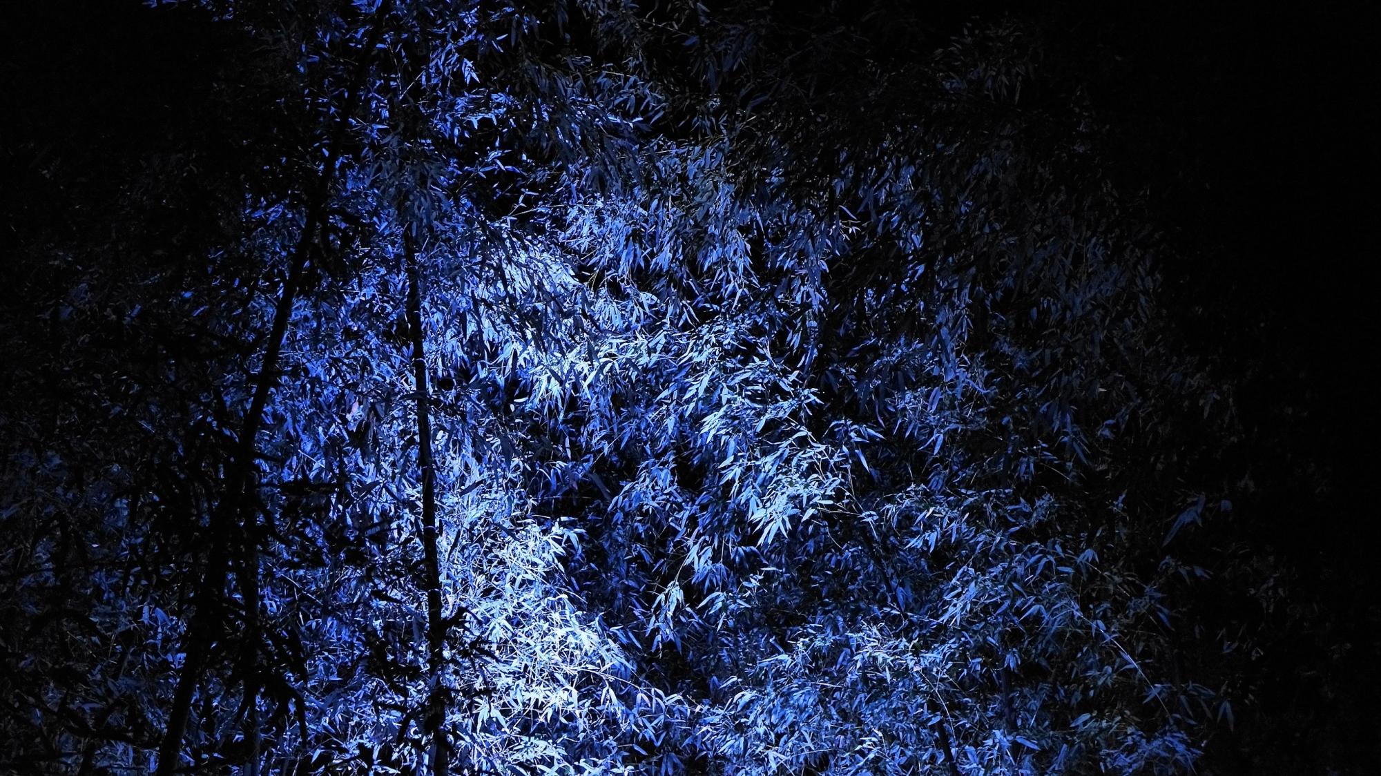 嵐山花灯路の幻想的な青色の竹林ライトアップ