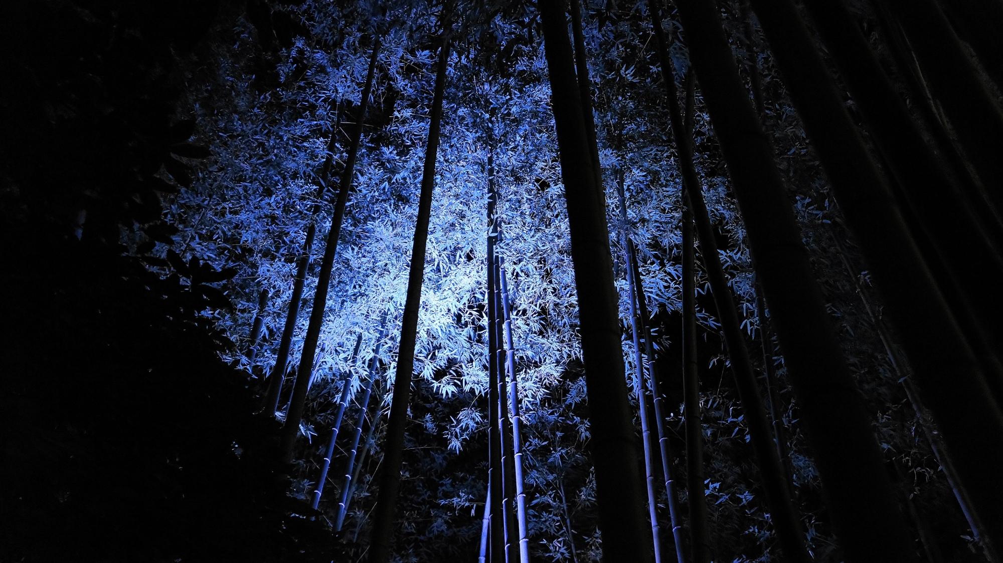 青色の竹林ライトアップ