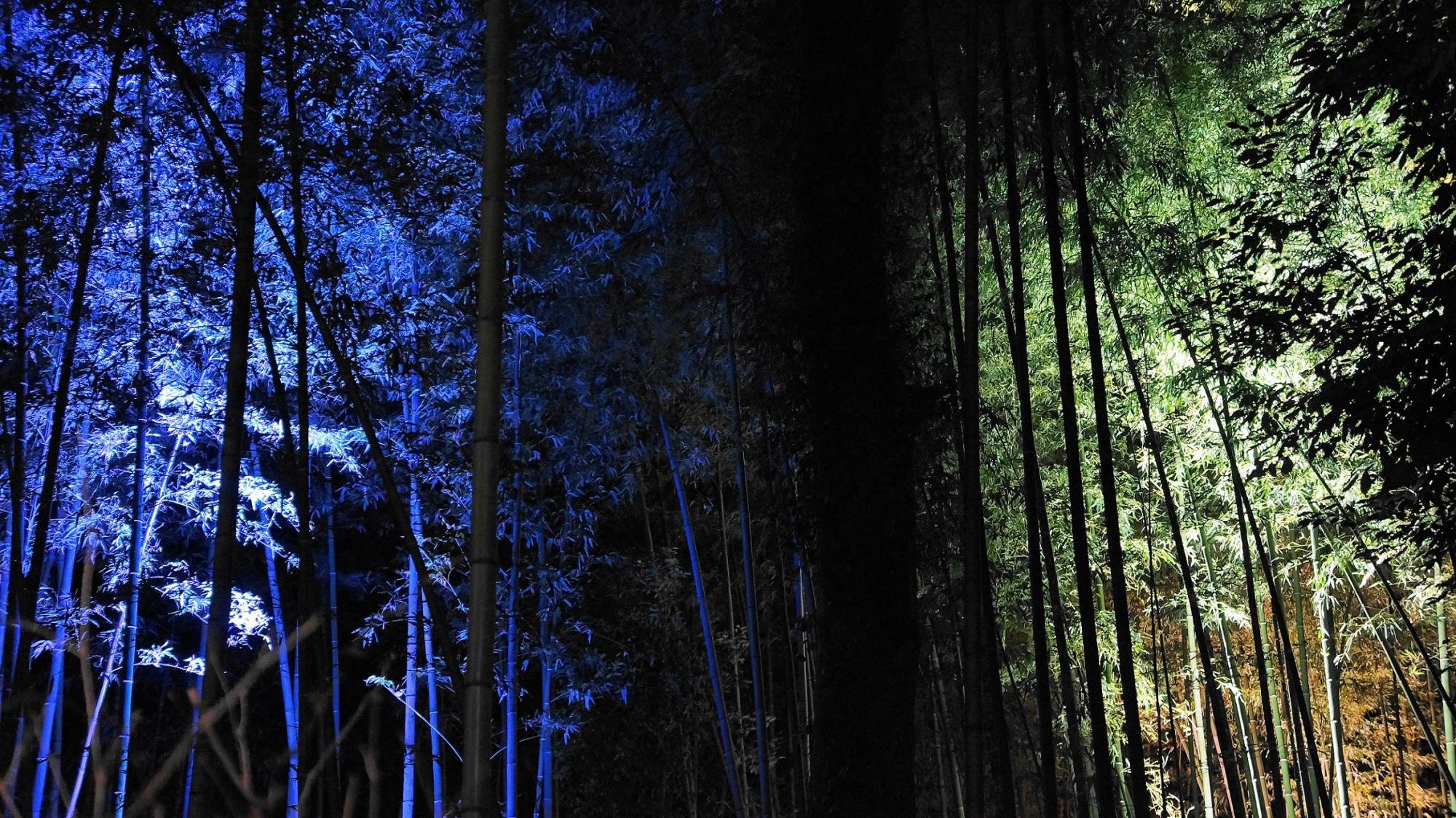 嵐山花灯路の綺麗な青色の竹林ライトアップ