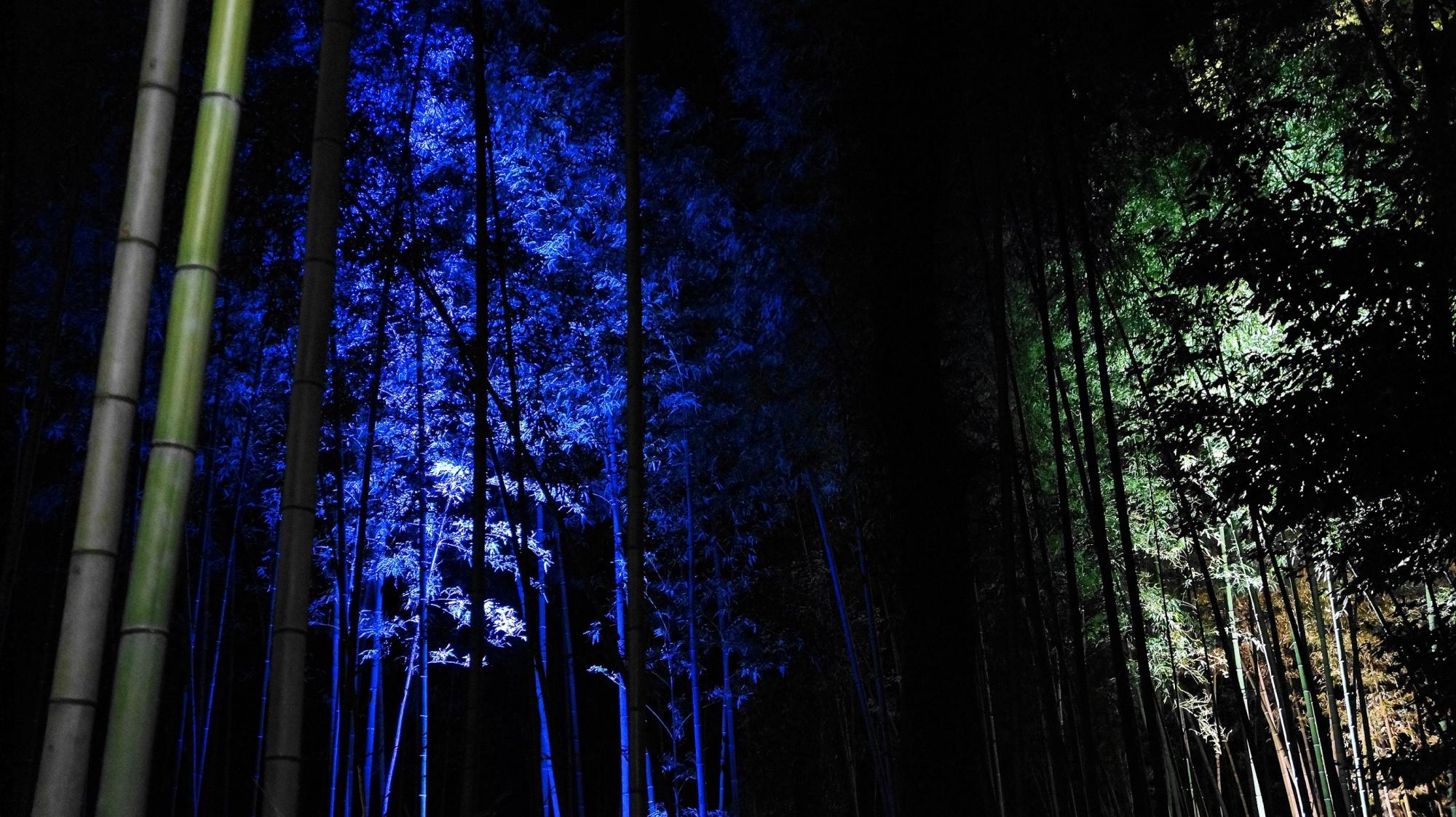 嵐山花灯路の神秘的な青色の竹林ライトアップ