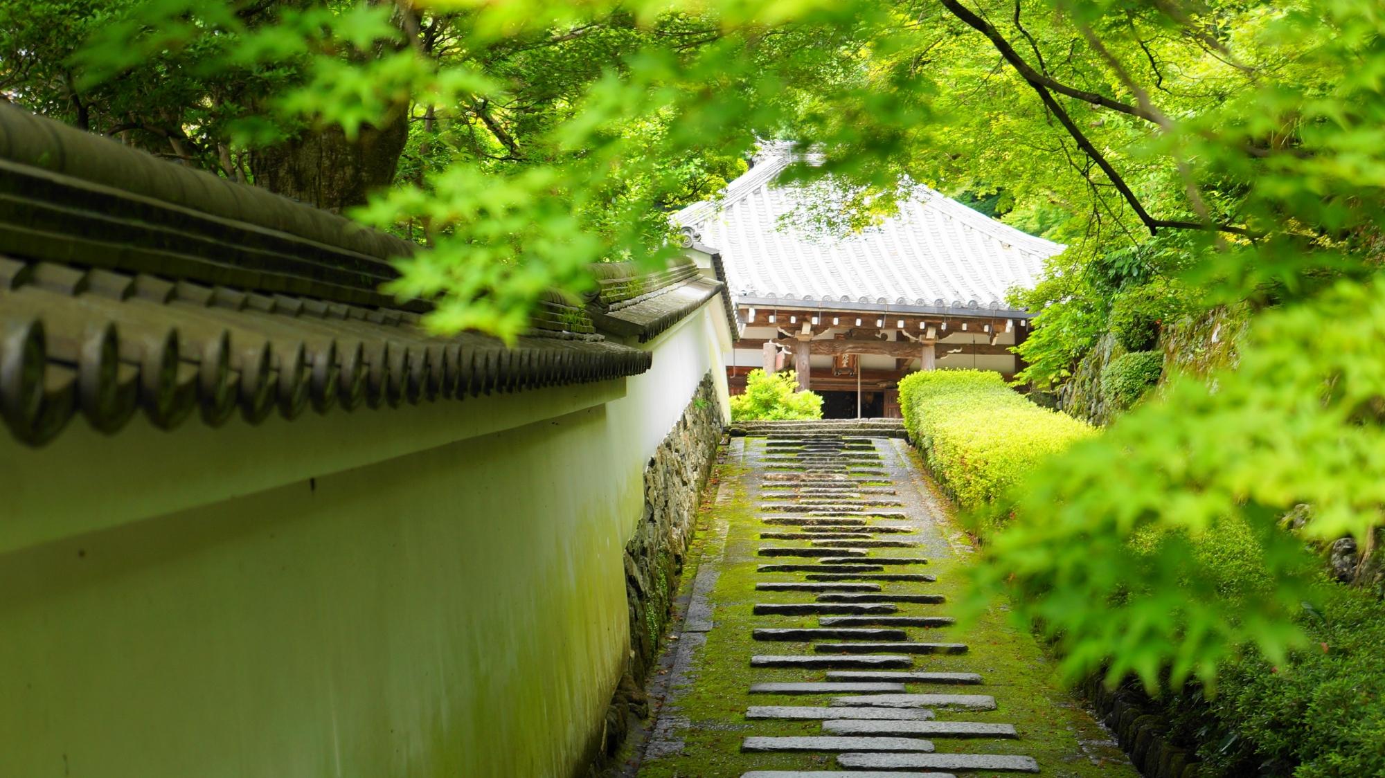 眩い新緑にそまる善峯寺の阿弥陀堂