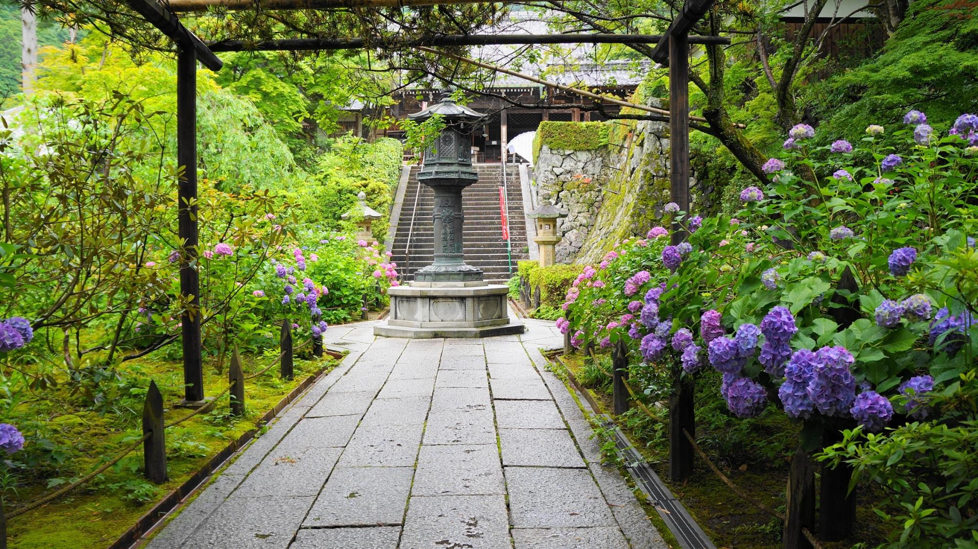 善峯寺の山門から続く紫陽花の咲く参道
