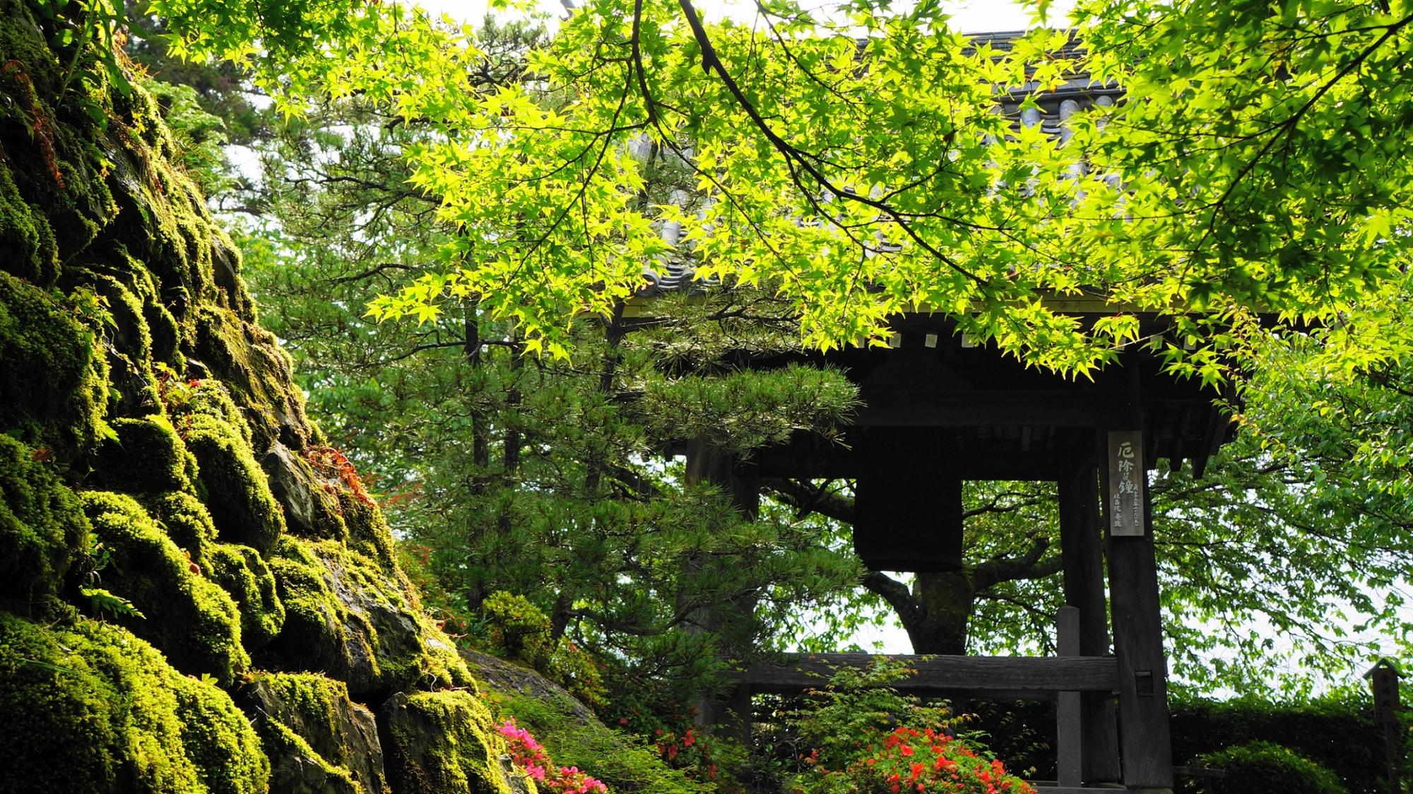 美しい新緑と苔につつまれた善峯寺のつりがね堂(鐘楼)