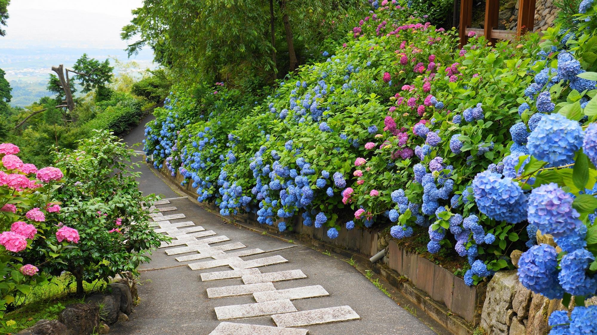 たくさんの紫陽花につつまれる善峯寺の幸福地蔵さんの下