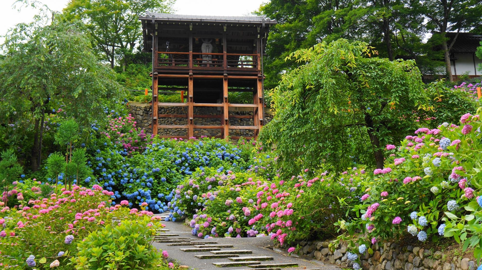 見上げる幸福地蔵さんと咲き乱れる紫陽花