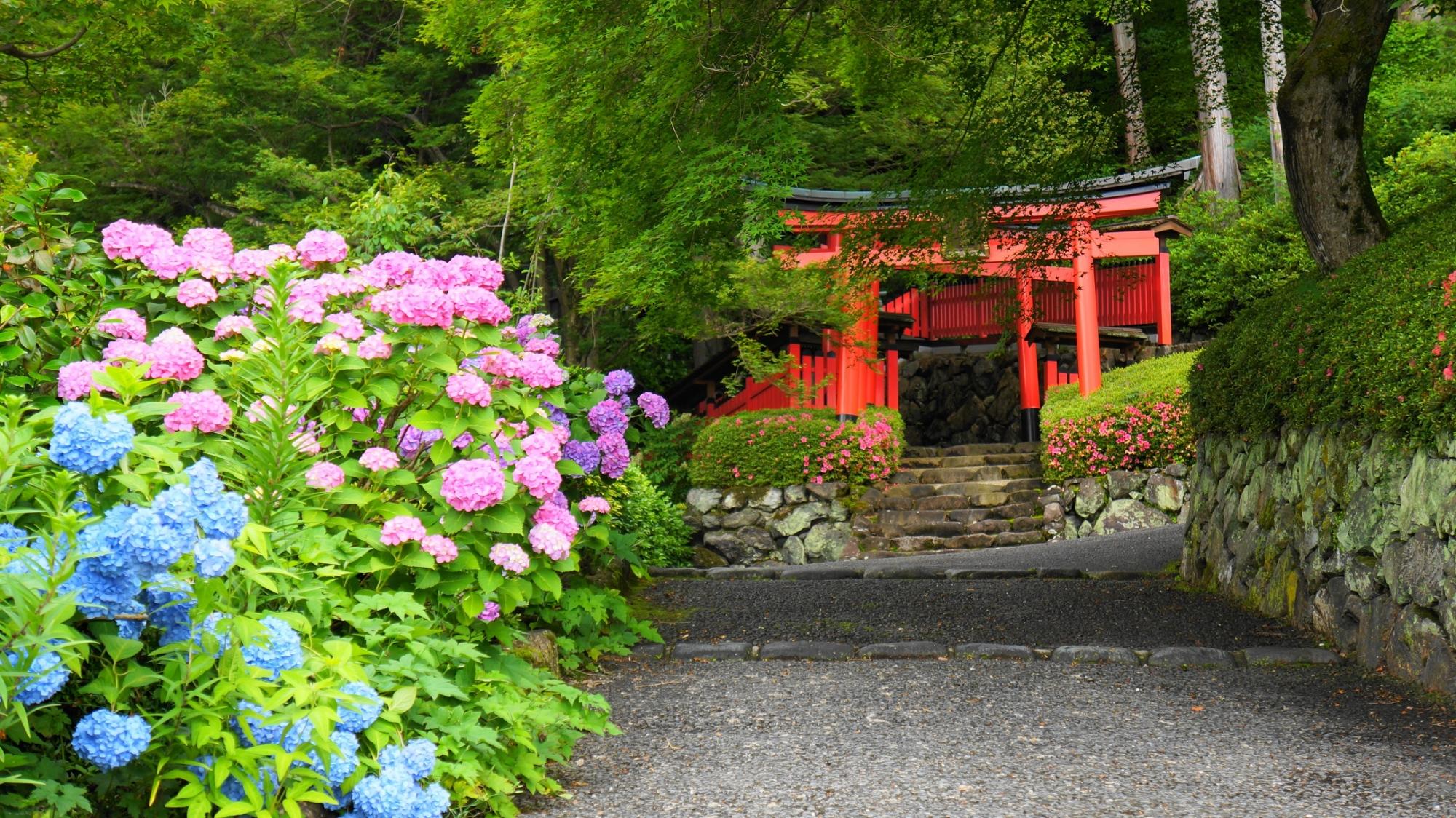 善峯寺の自然につつまれた絵になる紫陽花の風景