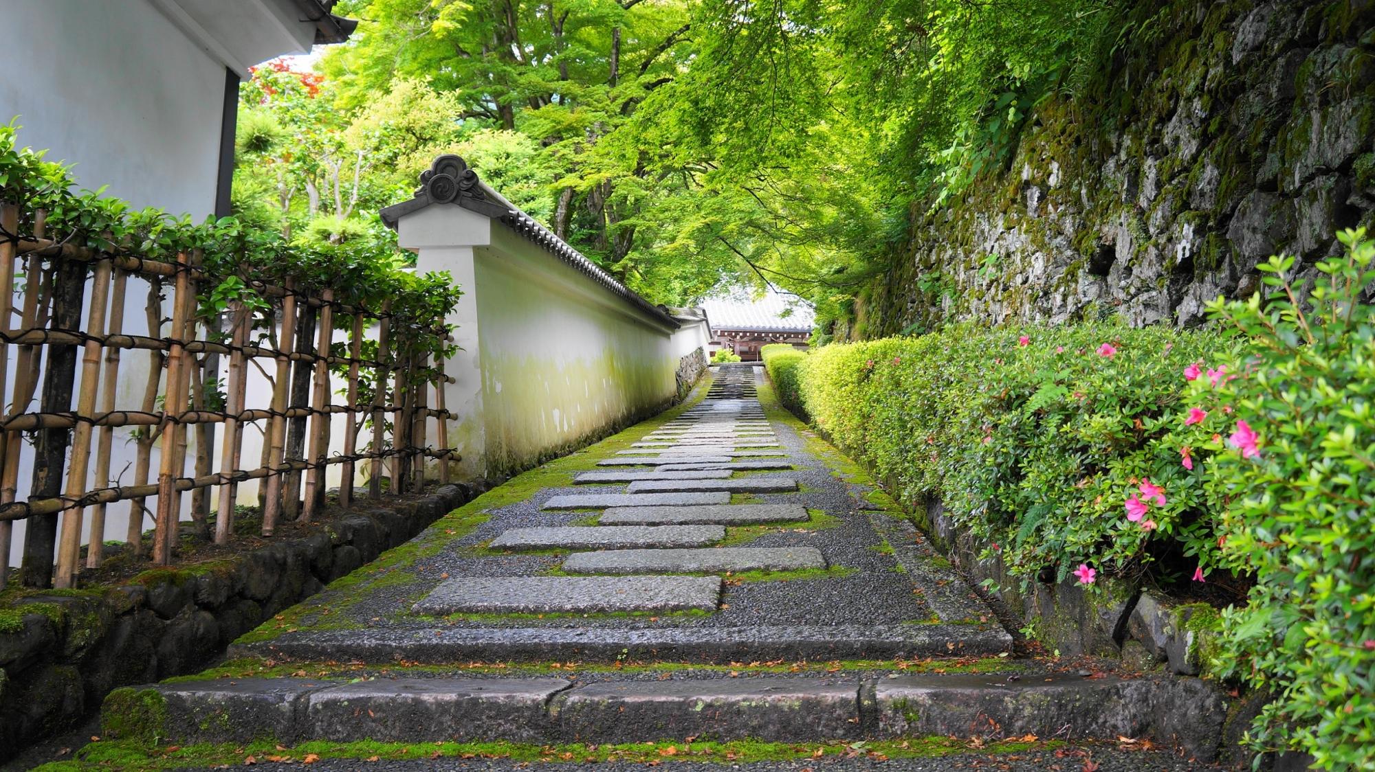 善峯寺の阿弥陀堂前のゆるい坂の風情ある新緑の風景