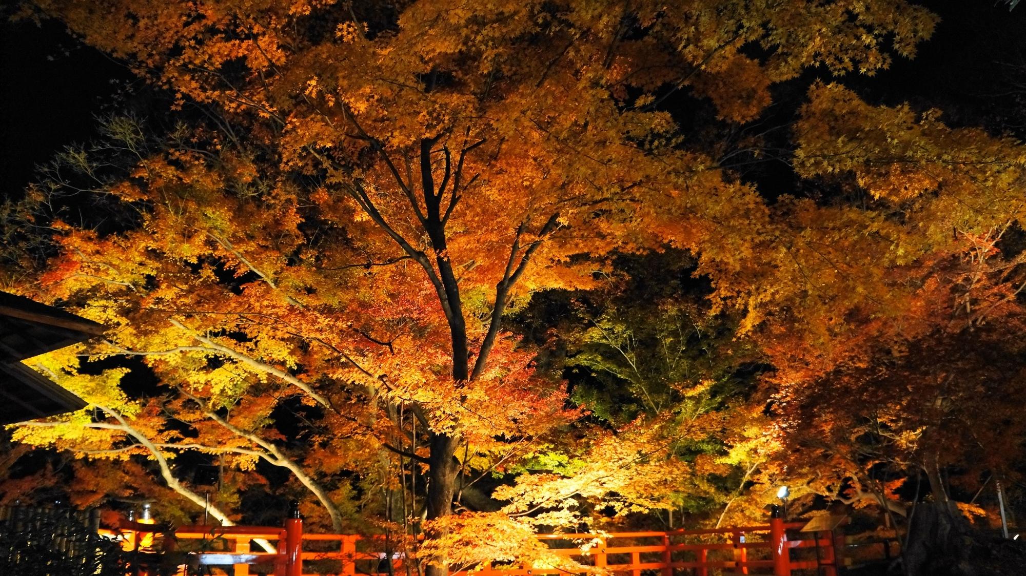 北野天満宮のもみじ苑の舞台の紅葉ライトアップ