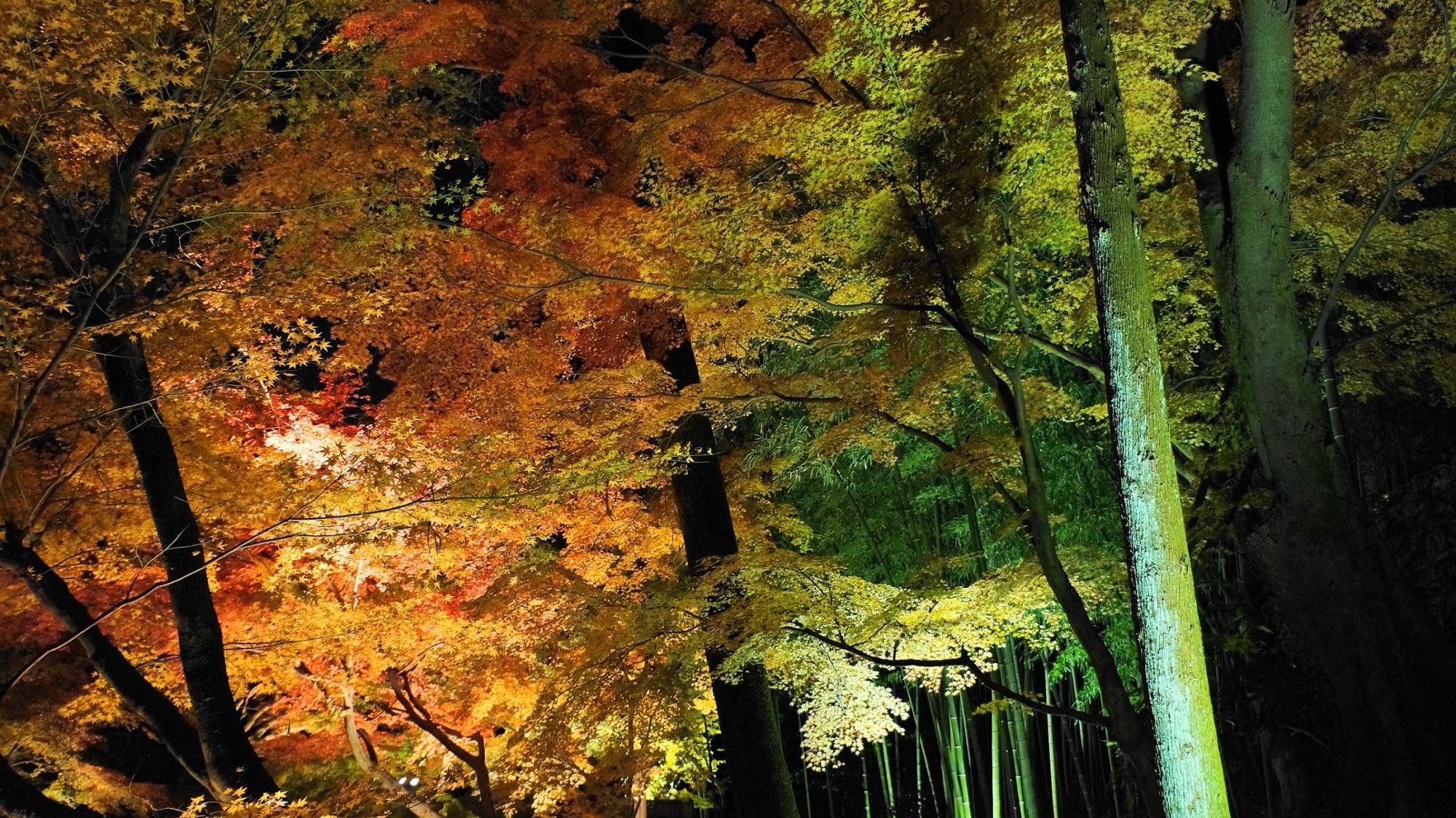 北野天満宮のもみじ苑紅葉と竹林ライトアップ
