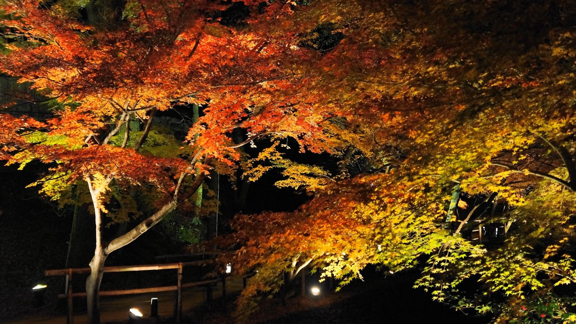 京都北野天満宮のもみじ苑紅葉ライトアップ