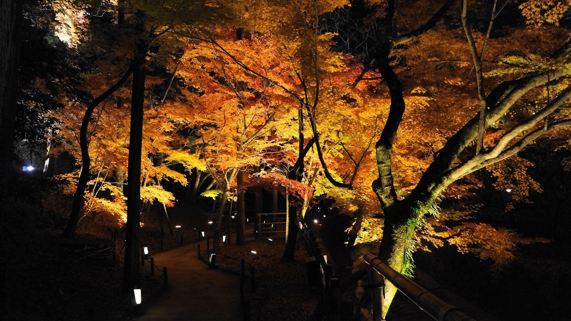 北野天満宮 紅葉 もみじ苑 ライトアップ