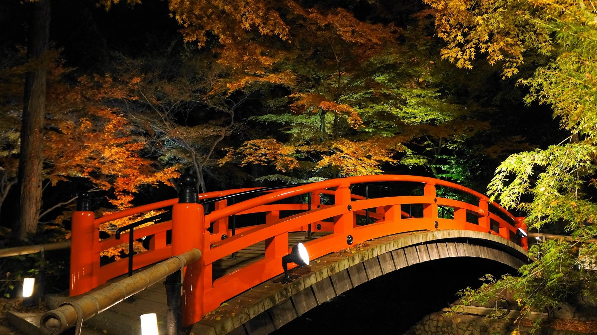 京都北野天満宮のもみじ苑の鶯橋と紅葉ライトアップ