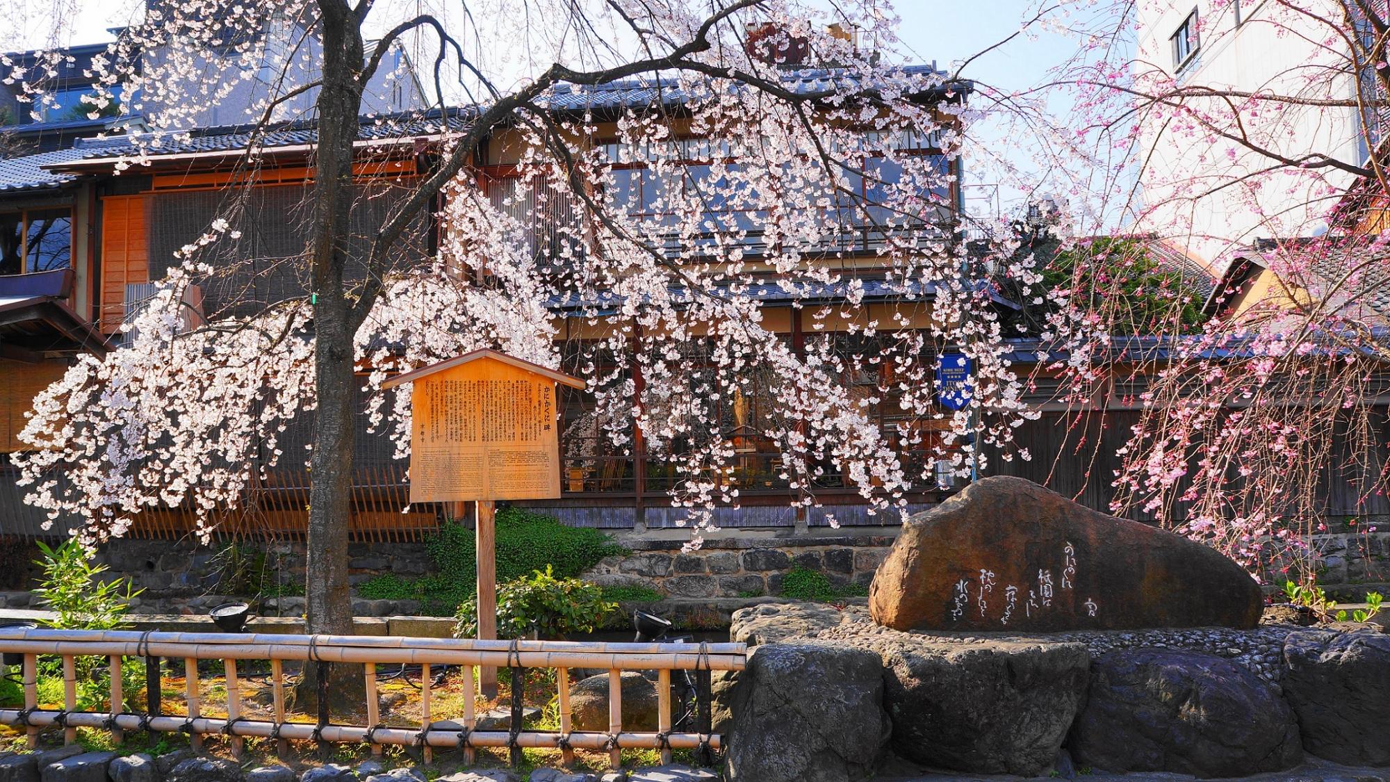 白川南通のかにかくに碑としだれ桜