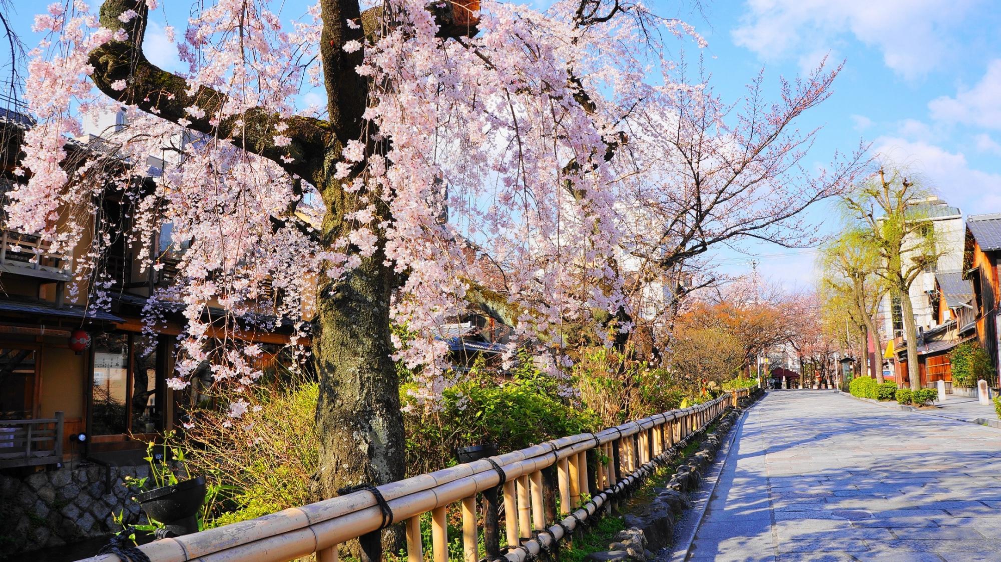 白川南通のしだれ桜